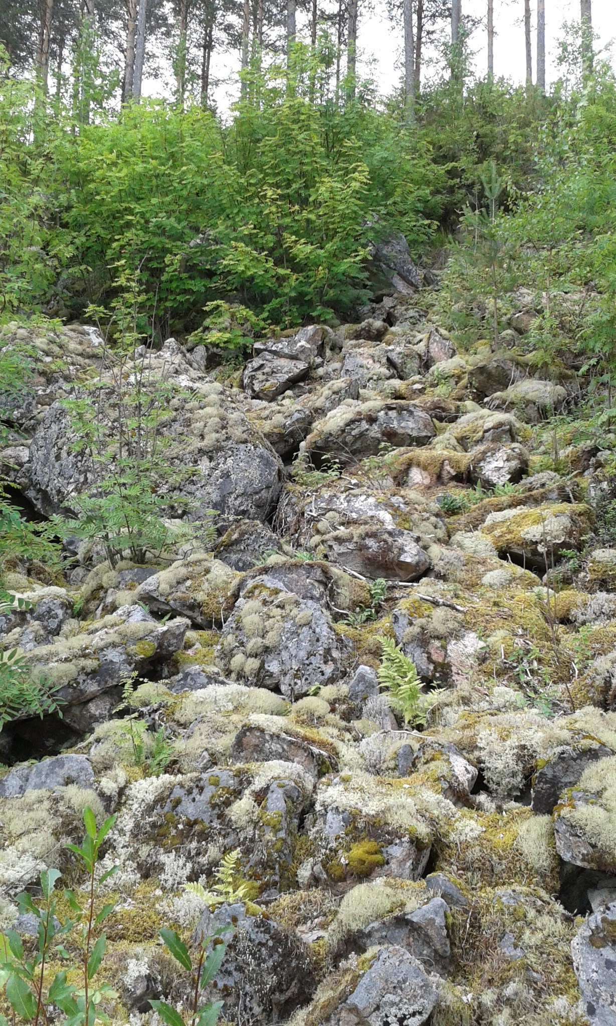 sammaleiset kivet by Pirkko Liisa Nikko