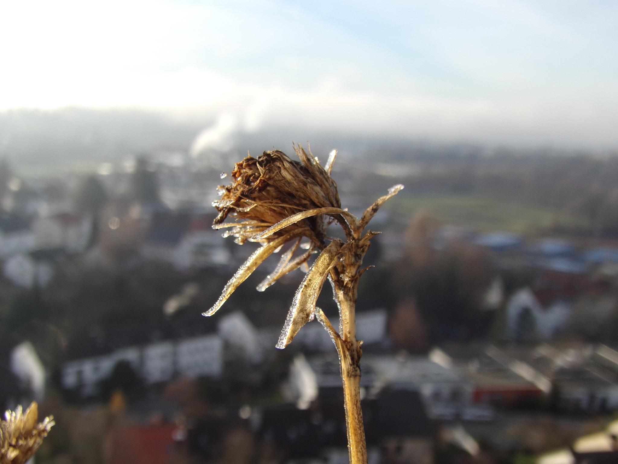 Flower by PolishGirl