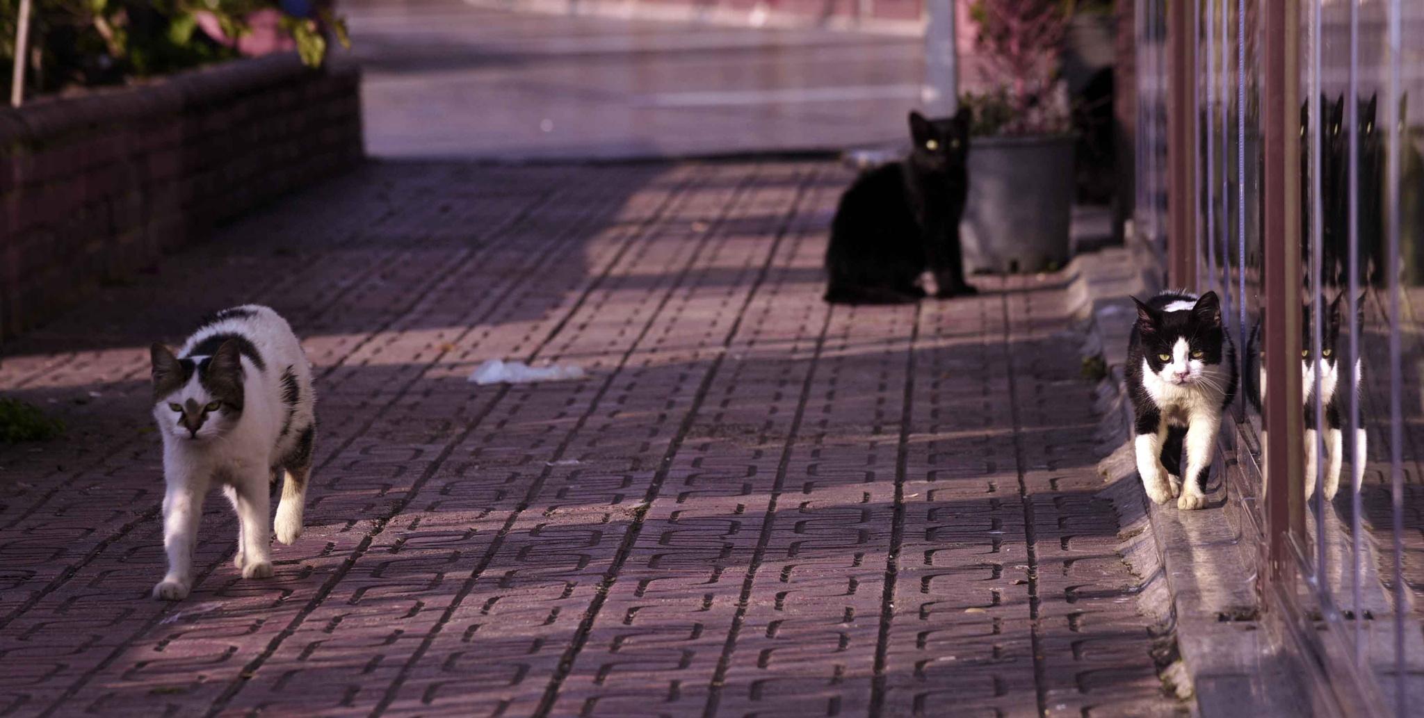cat by alferedo.n