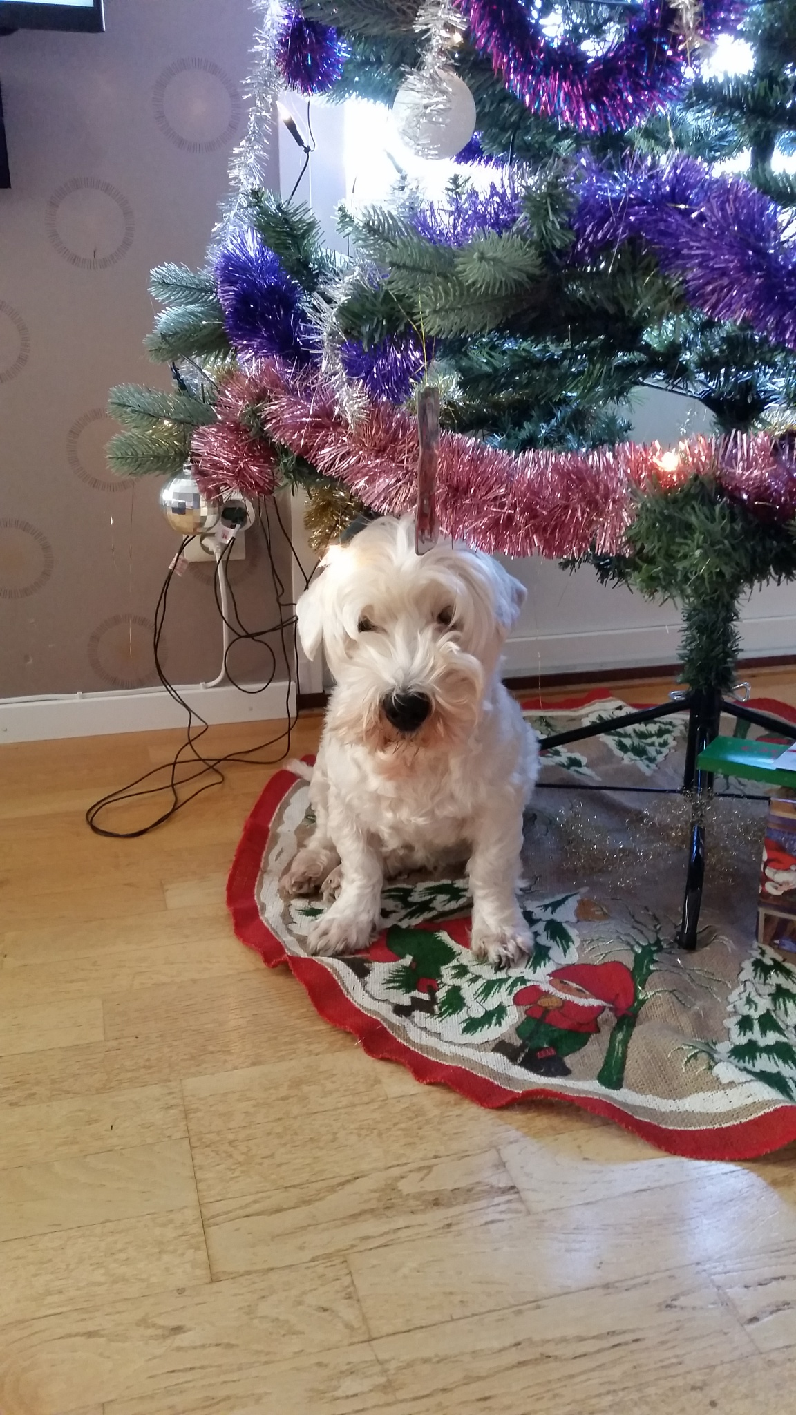 My dog under the Christmas tree  by CeciliaAndersson