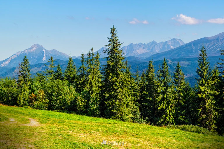 Spruce forest on a meadow in Tatras by Mike Pellinni