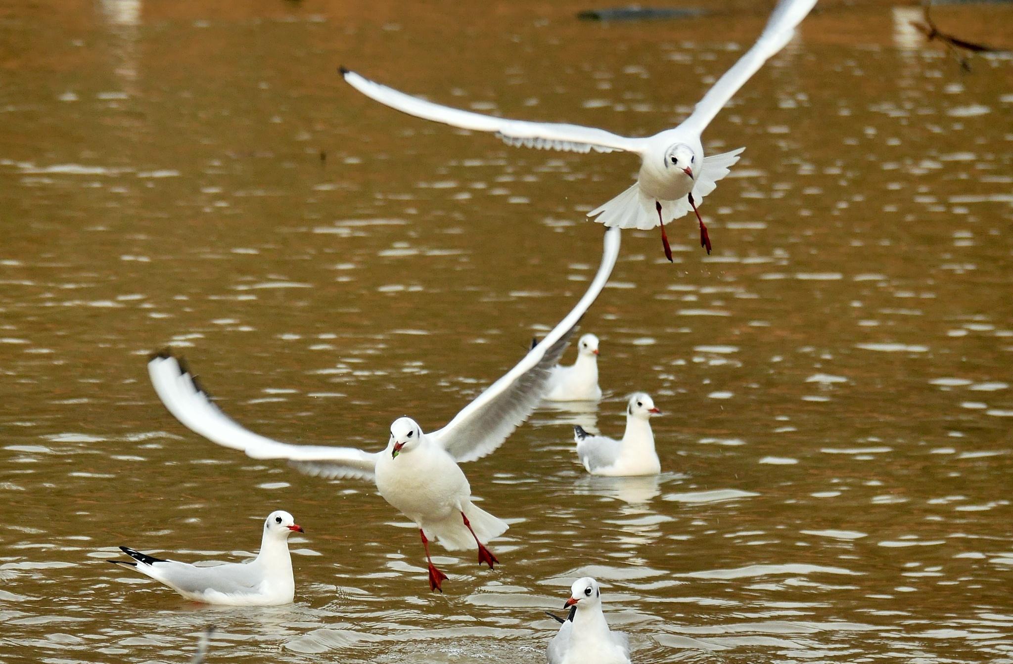 Birds by Seymour White