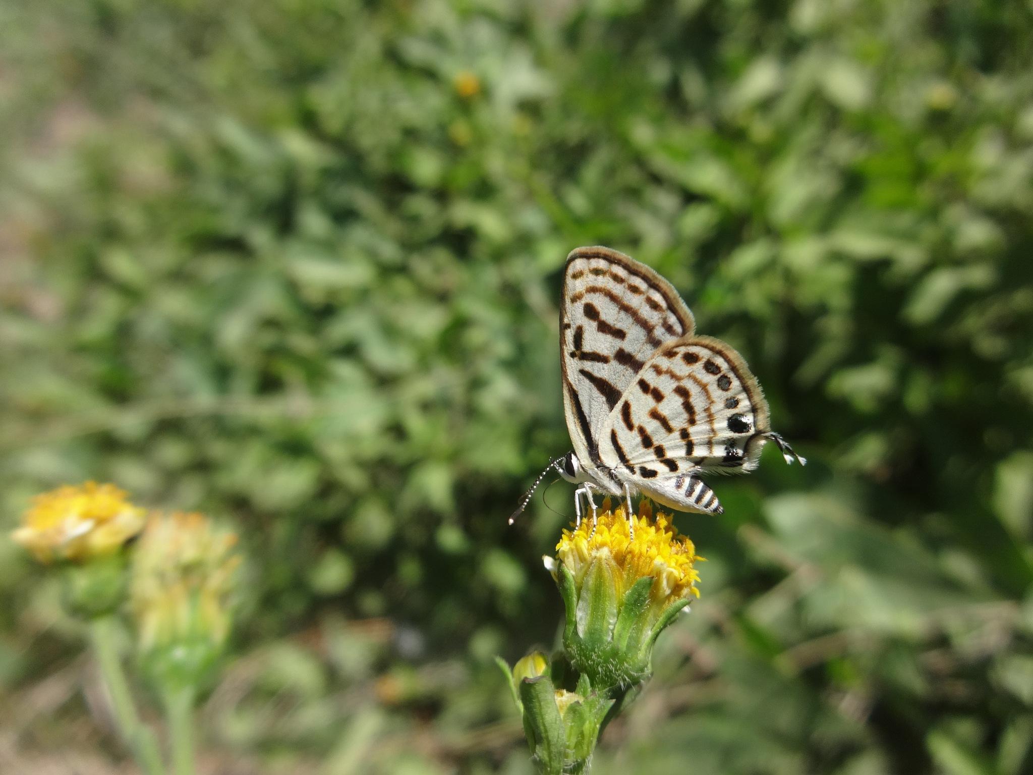 Butterfly  by zakariaahmad345