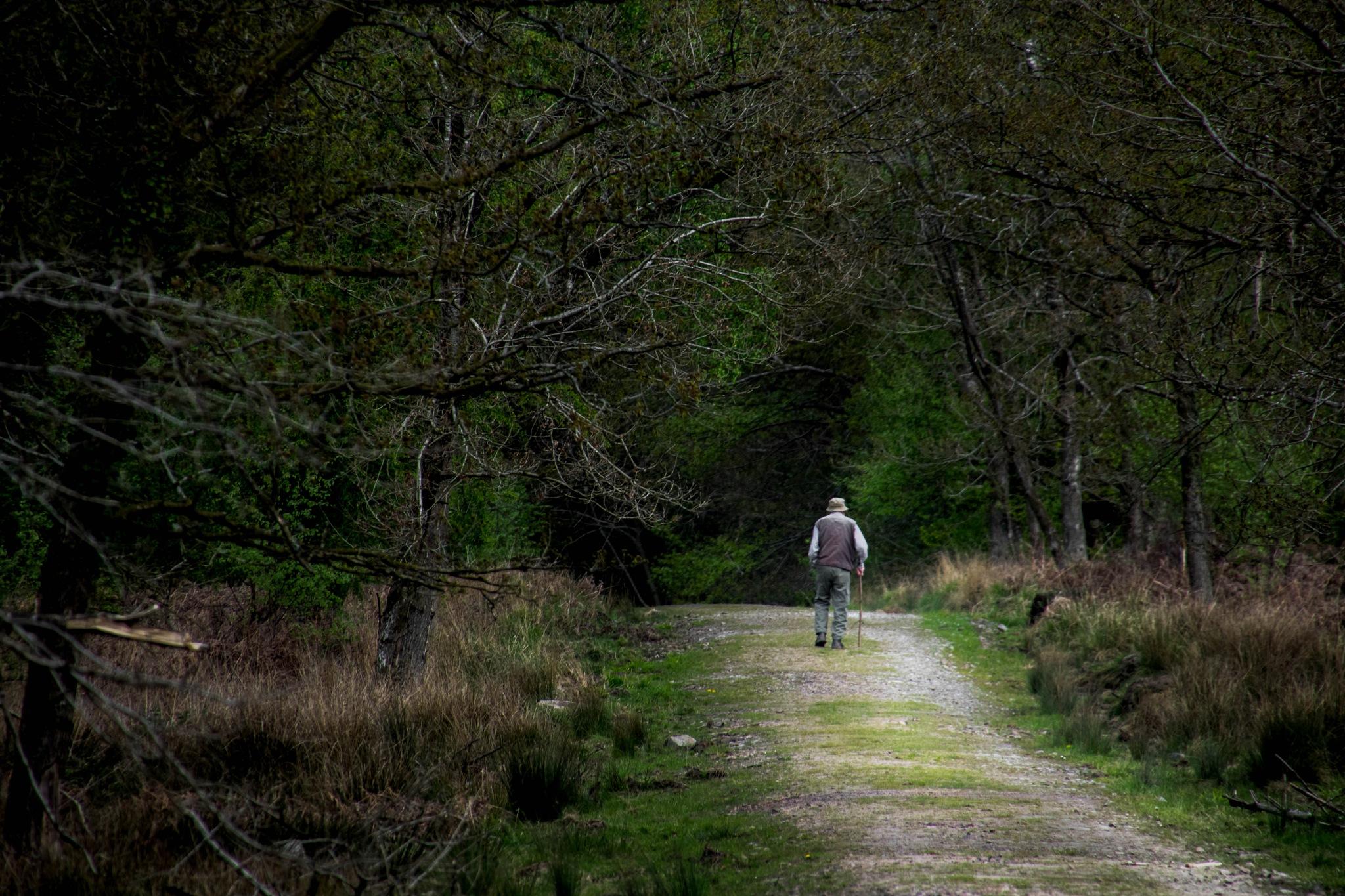 Forest walk by Matt Ewin