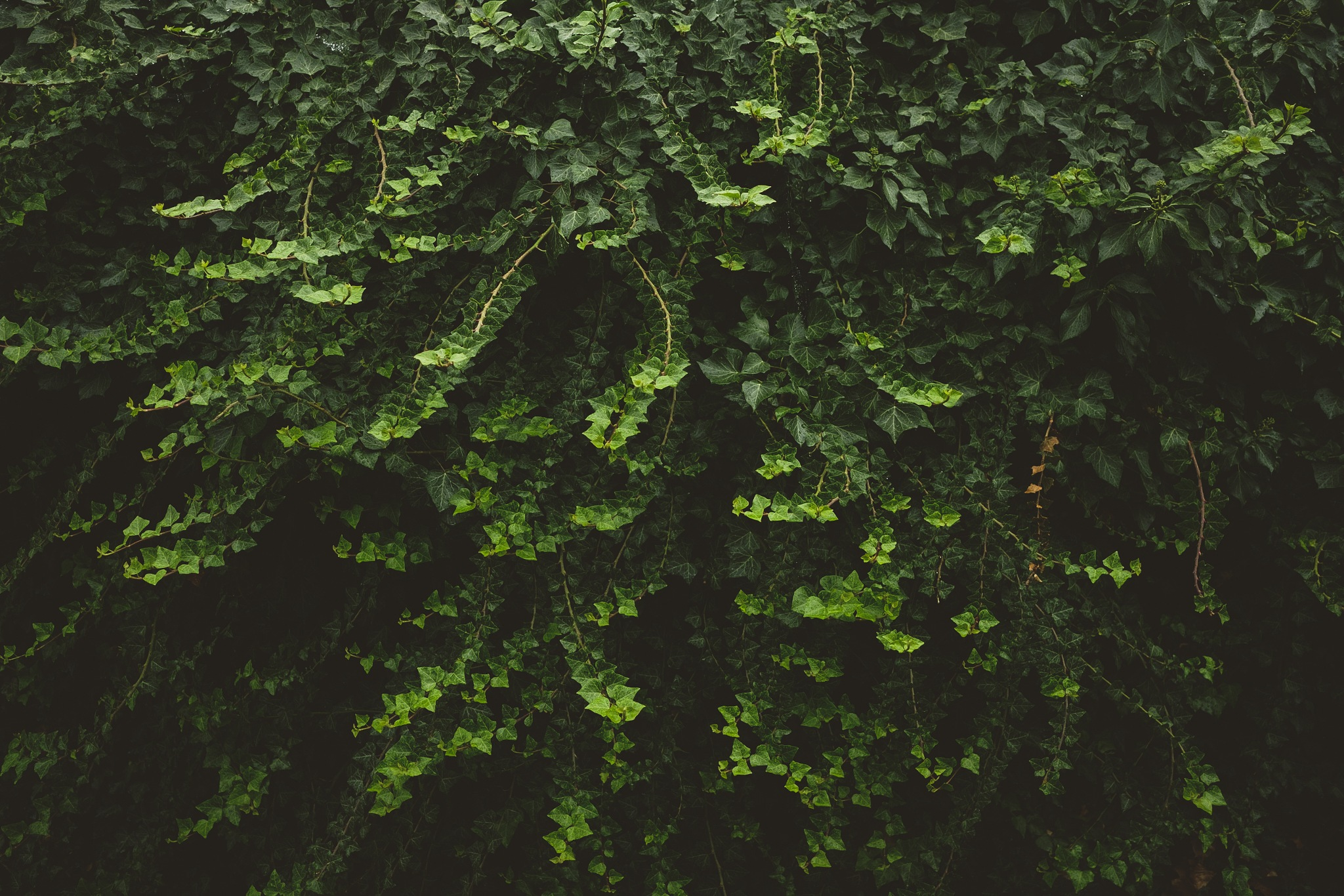 Green wall by Joel Andersson