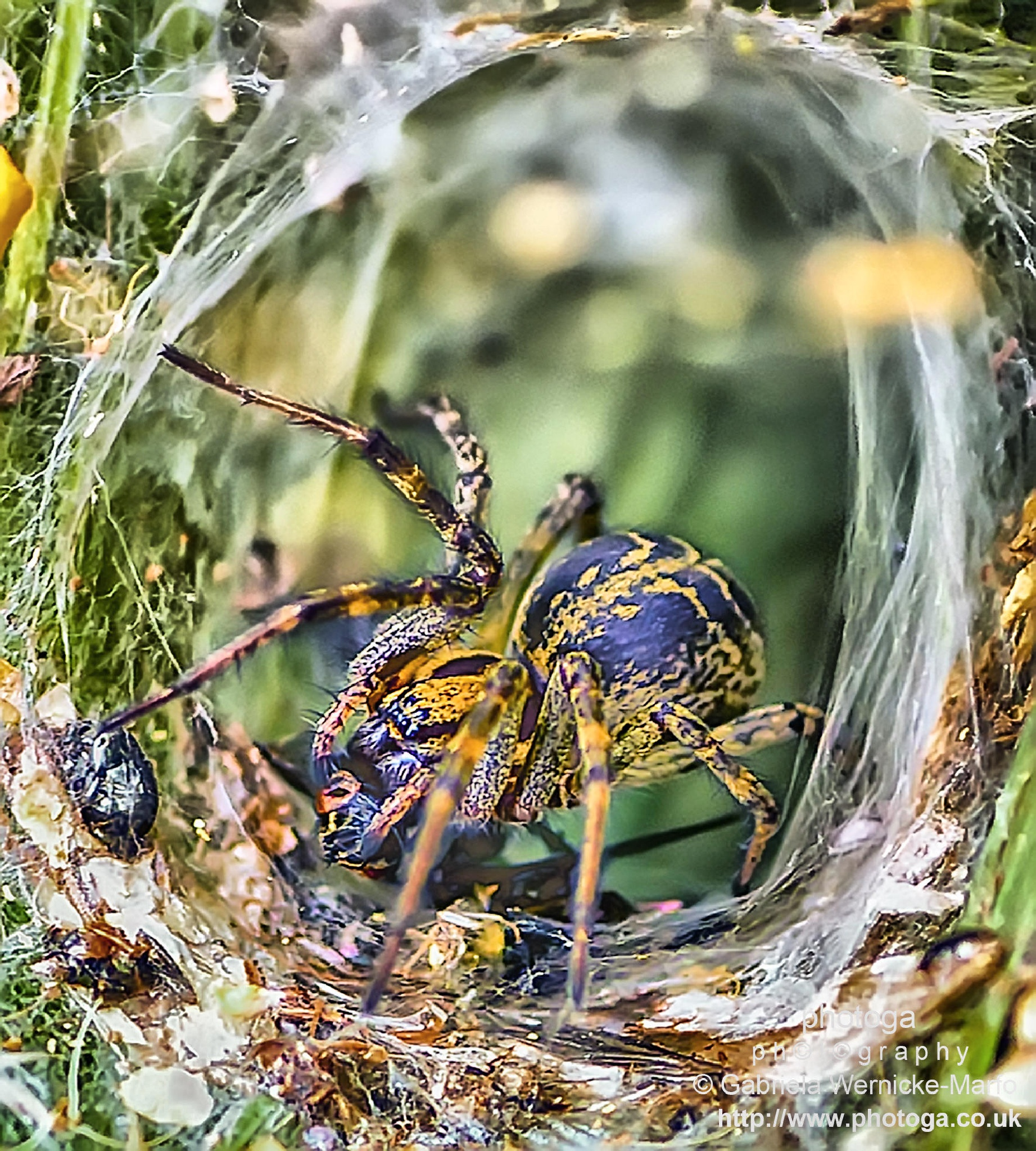 Closer To My Web by photogaphotography