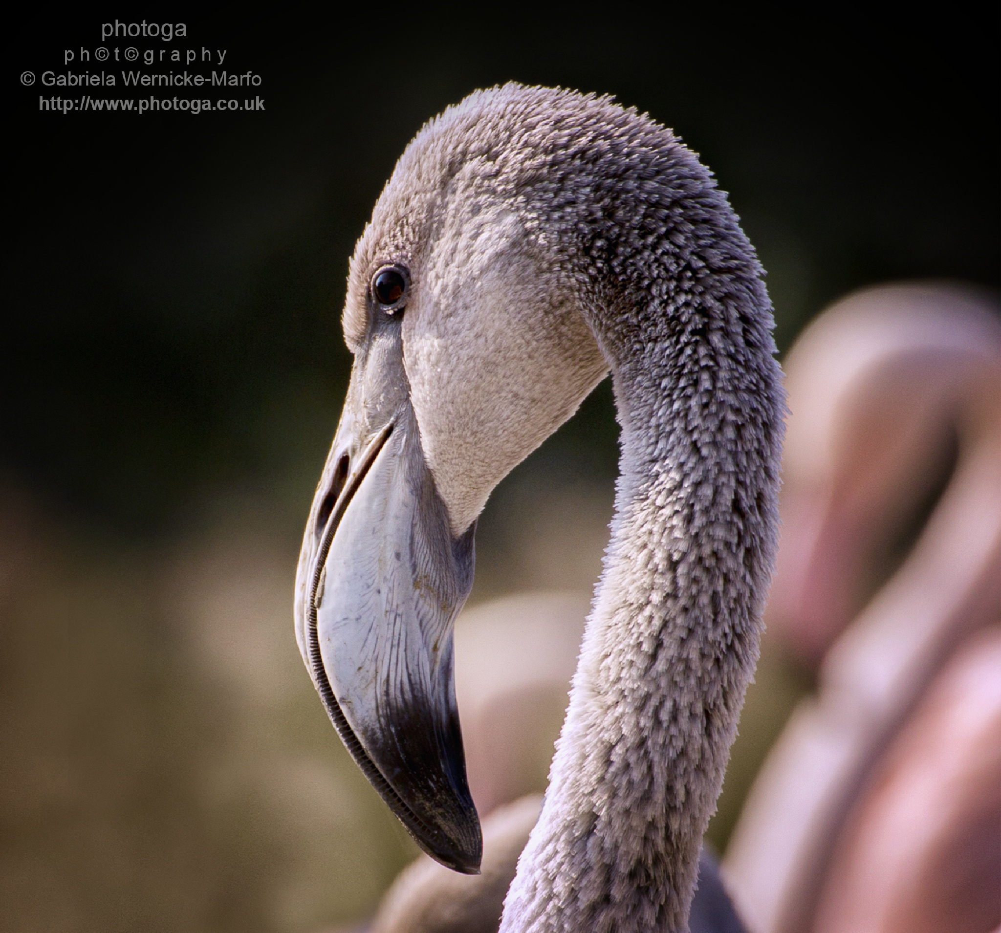 I See You by photogaphotography