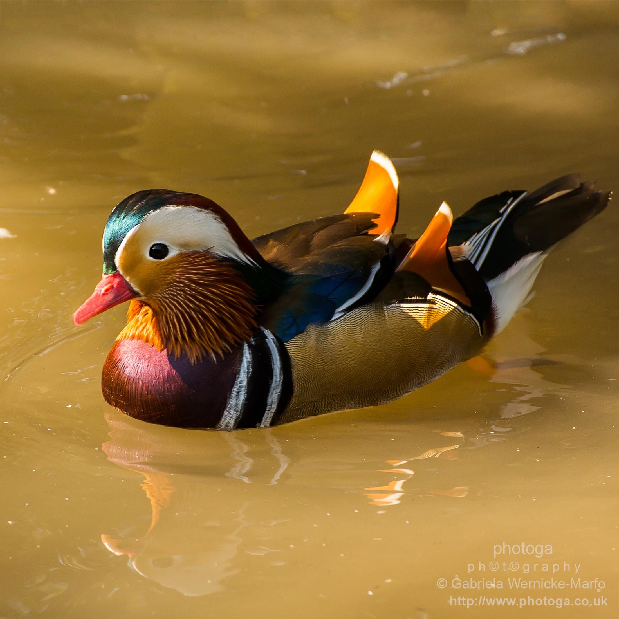 Photo in Nature #birds #nature #wildlife #canon #photogaphotograhy