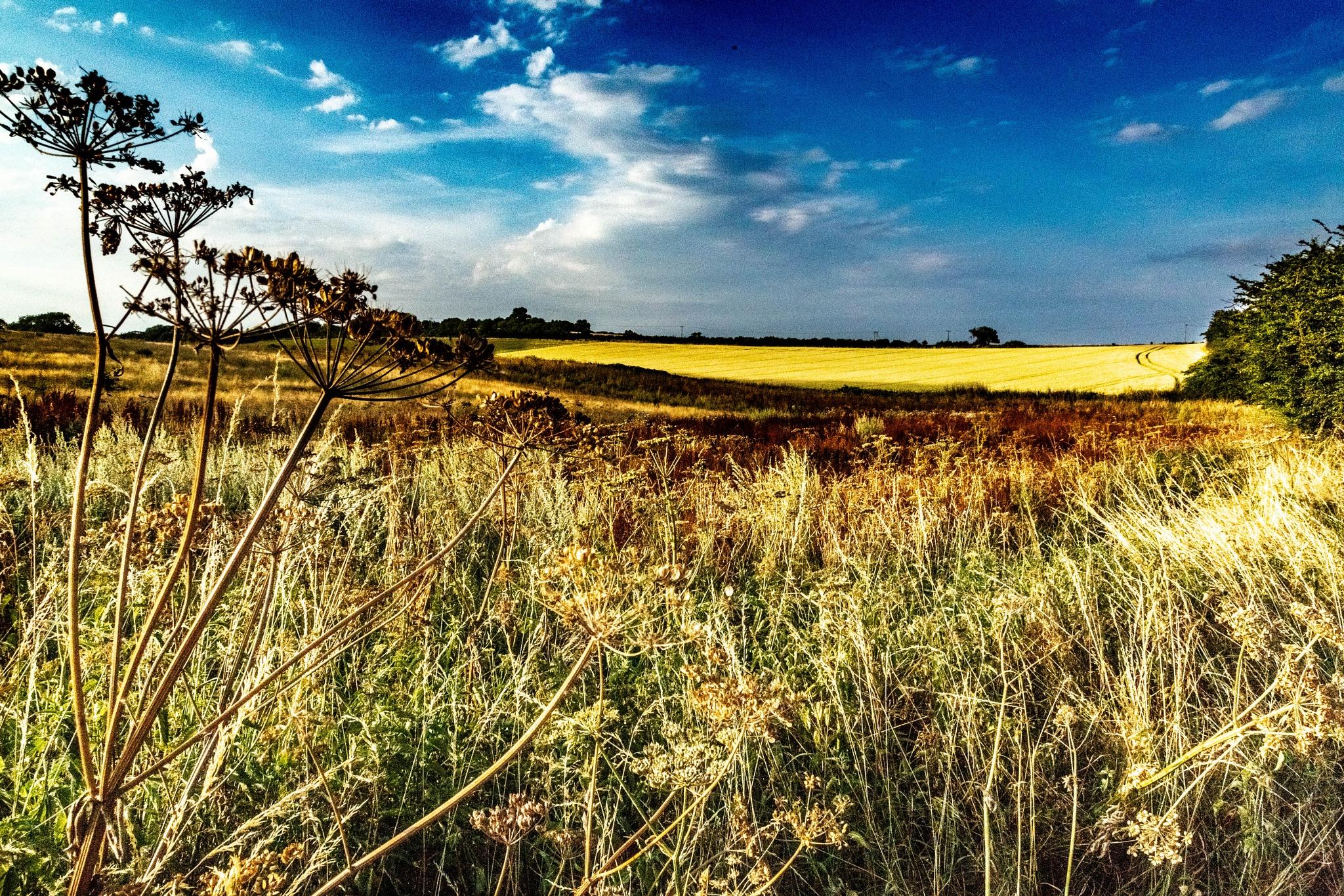 Dry Season by photogaphotography