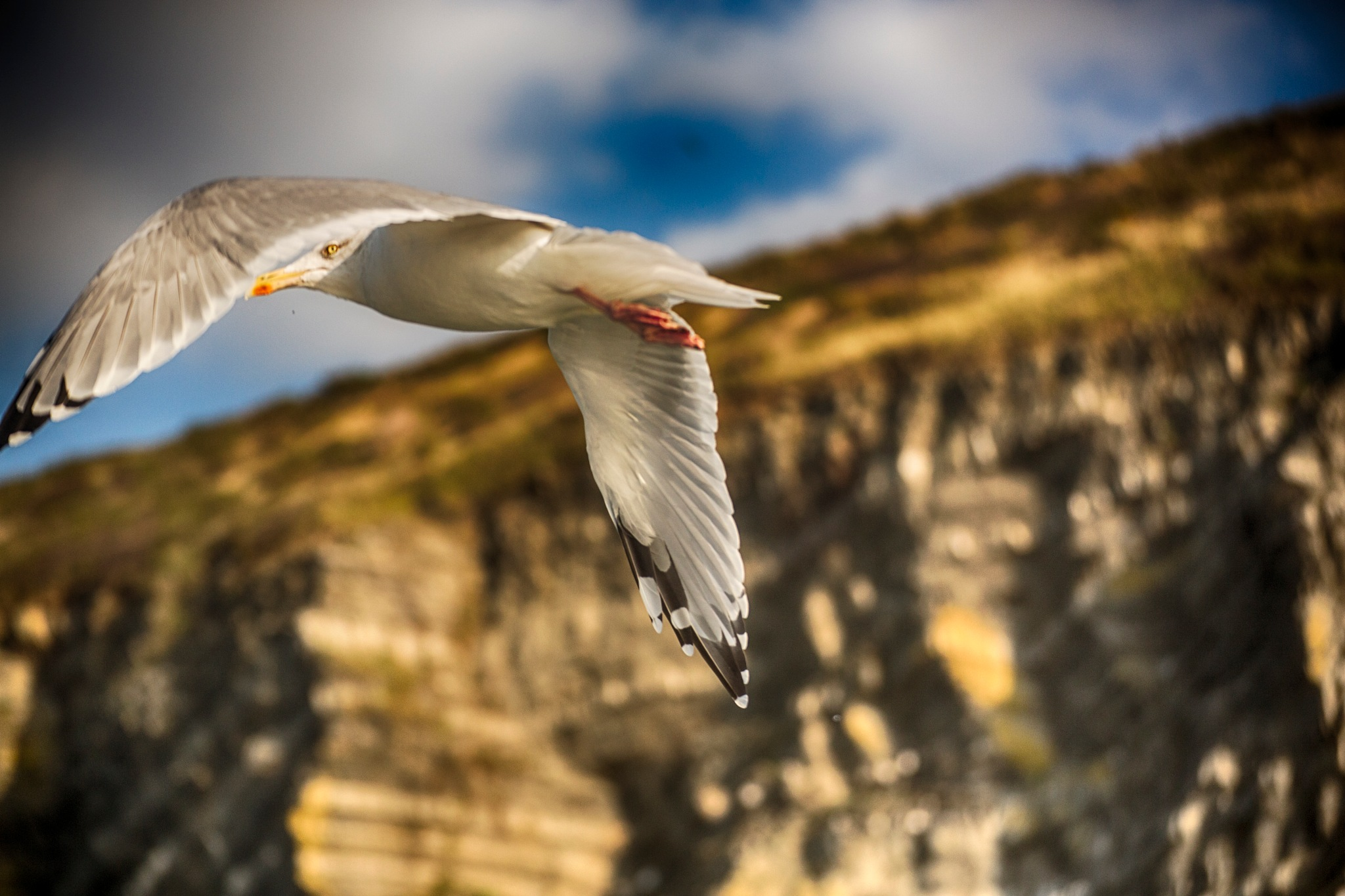 The Gull by photogaphotography