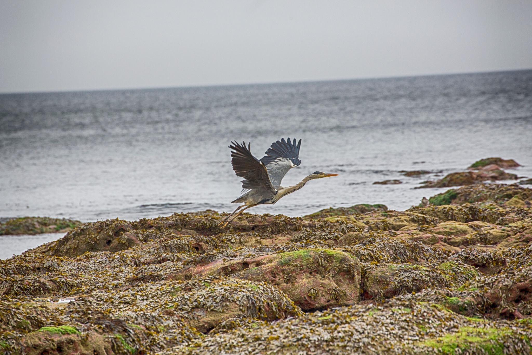 flight by photogaphotography