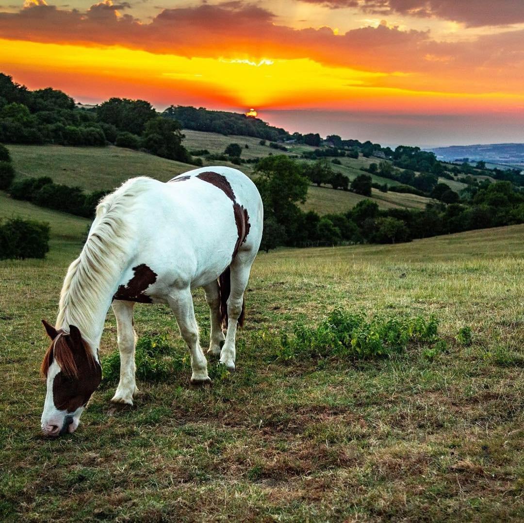 Sunset Graze  by photogaphotography