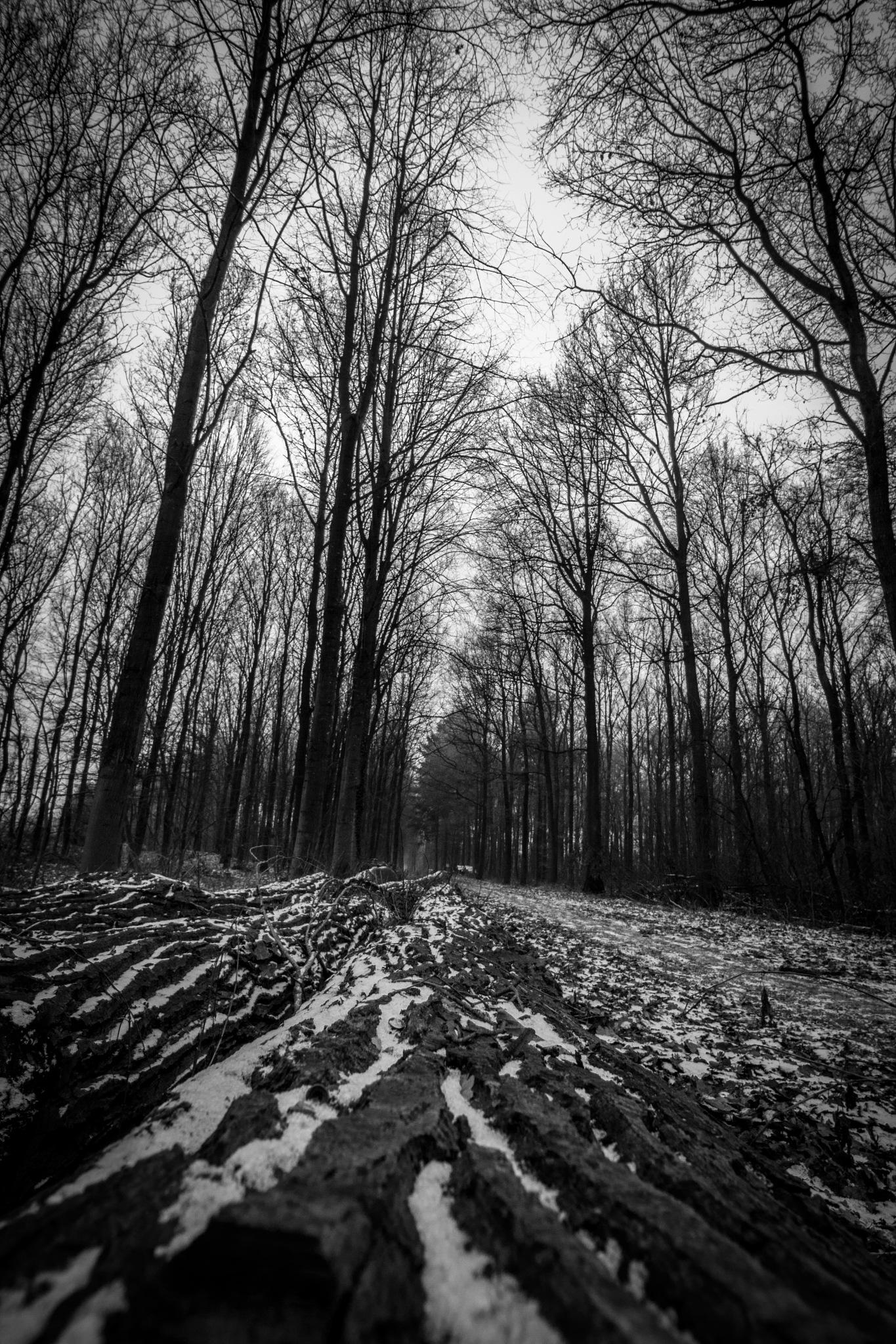 Black & White by Mahmod Dahnin