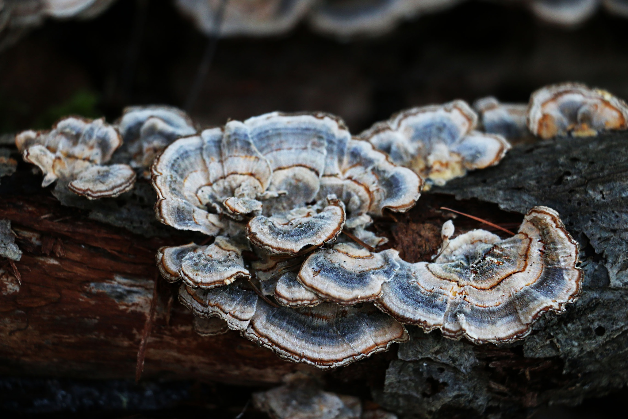 Fungi by BeePhotographer