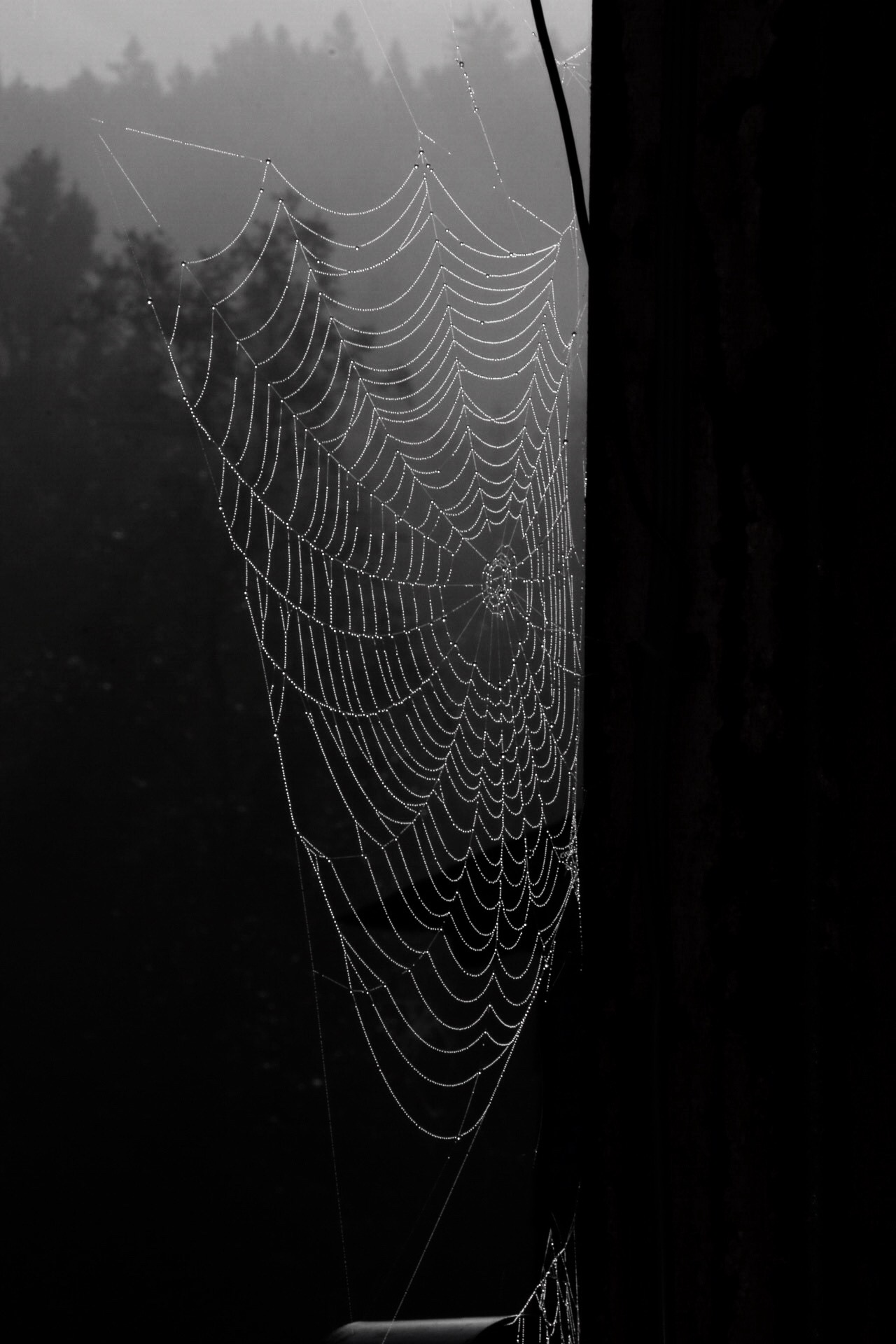 Morning Web by BeePhotographer