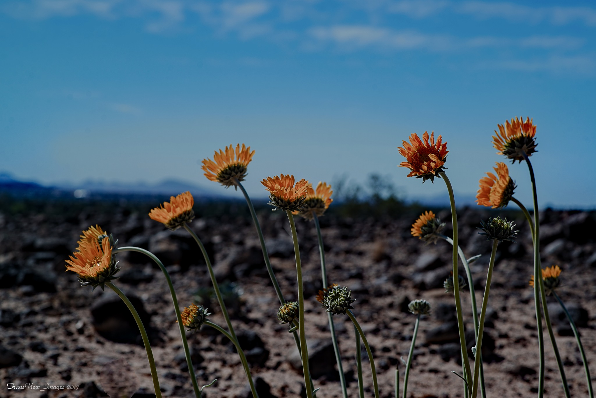 Living in the desert by Transfiguracion Images