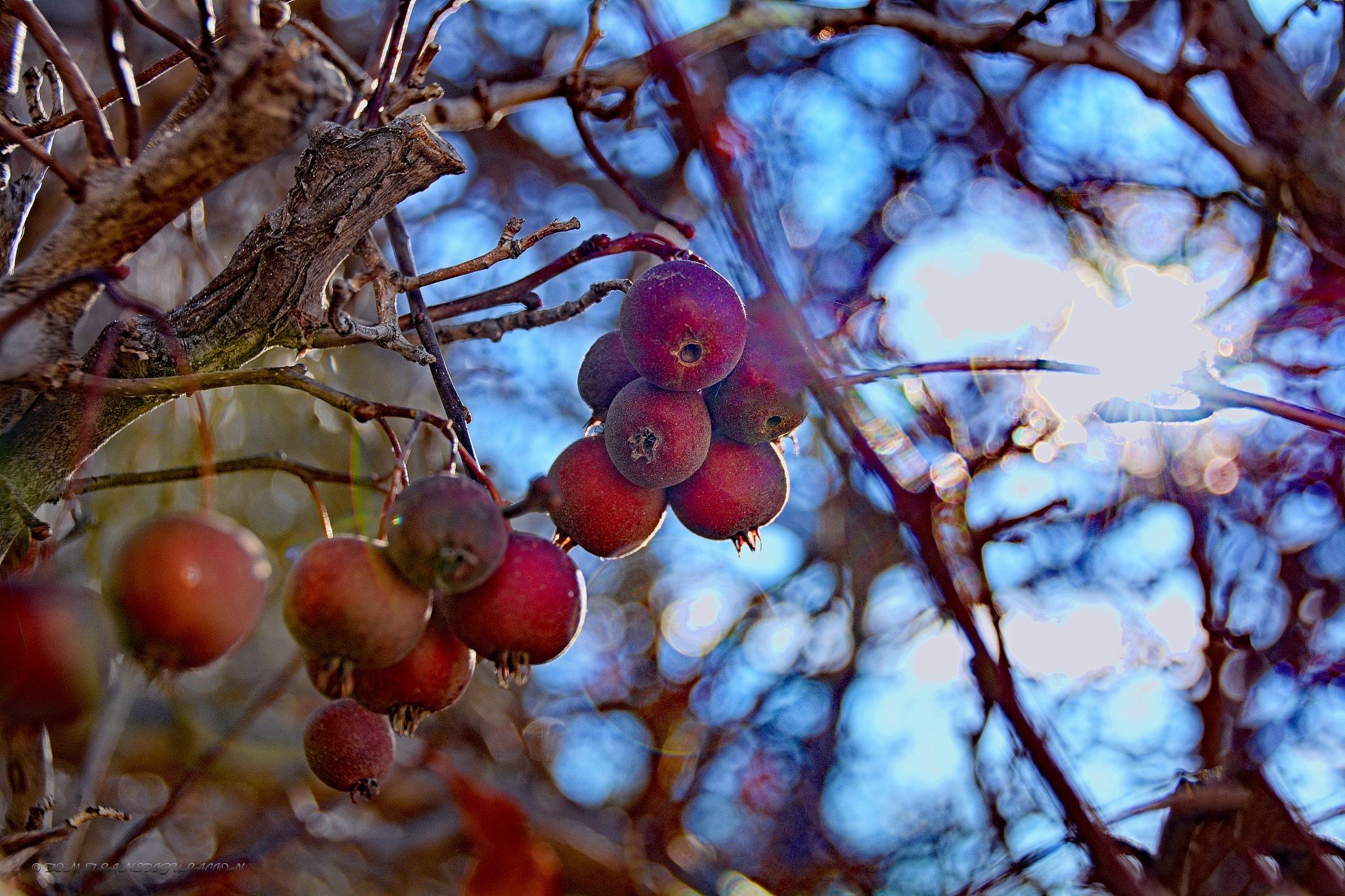 Photo in Macro #fruit #tree #nature #random shot