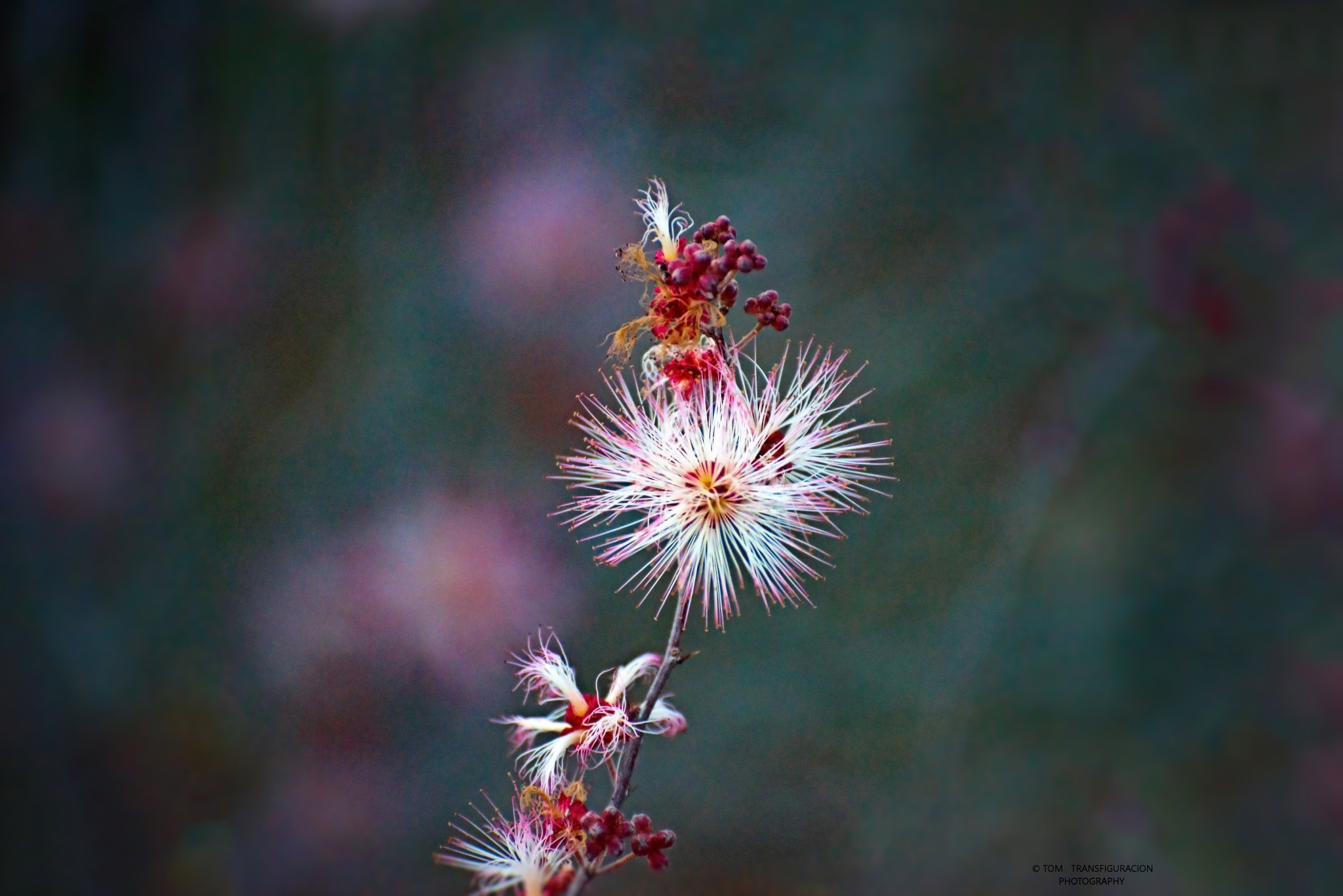 ***Beauty*** by Transfiguracion Images