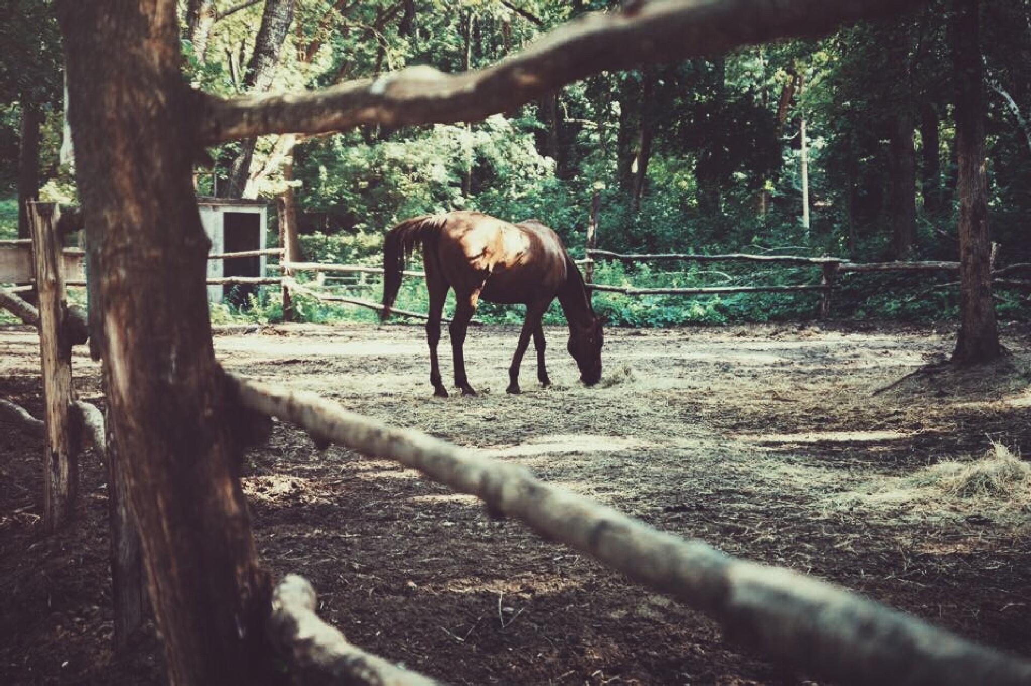 Horse lover  by ErzaZik