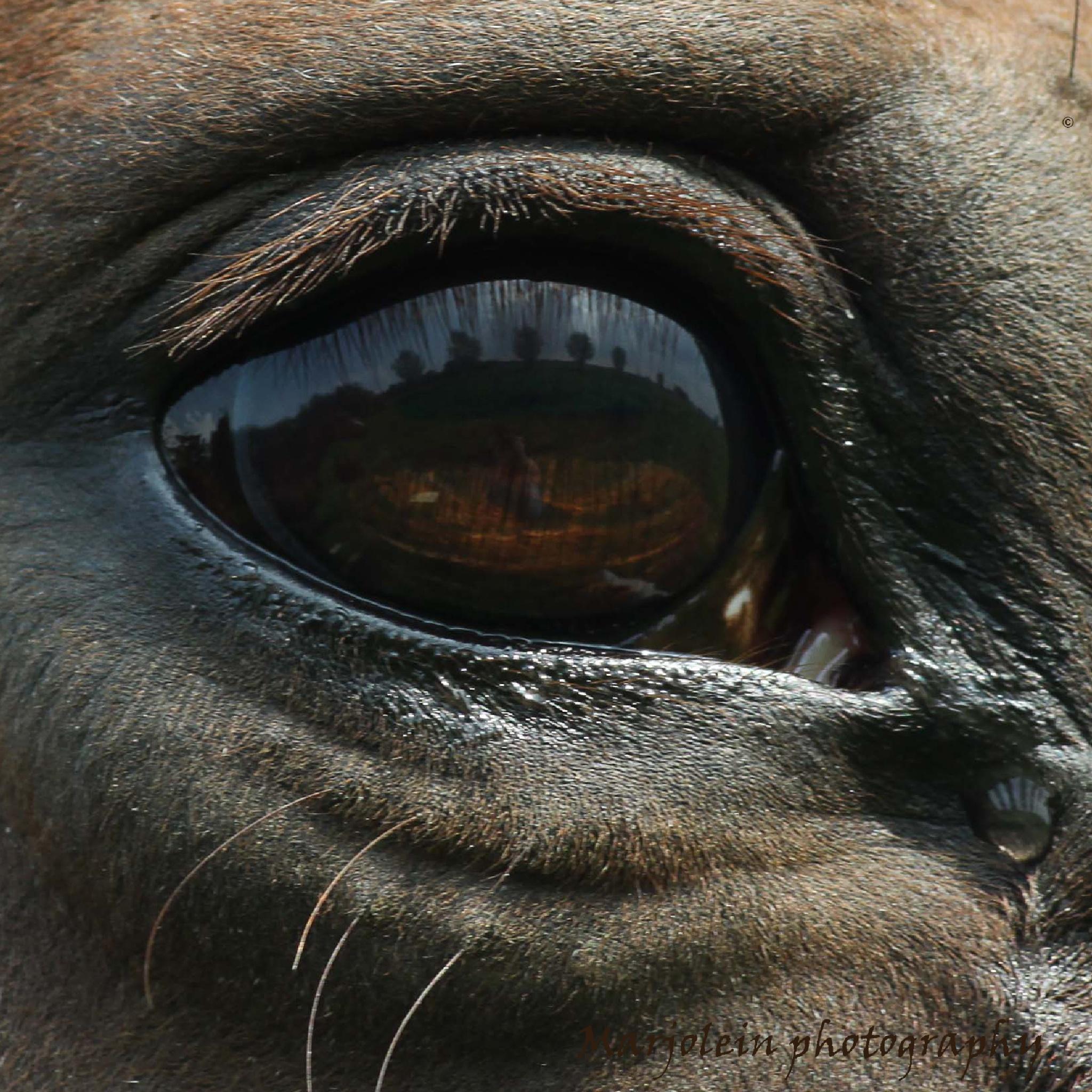 The story in a horses eye\\\een verhaal in een paarden oog :-) by Marjolein Deelen