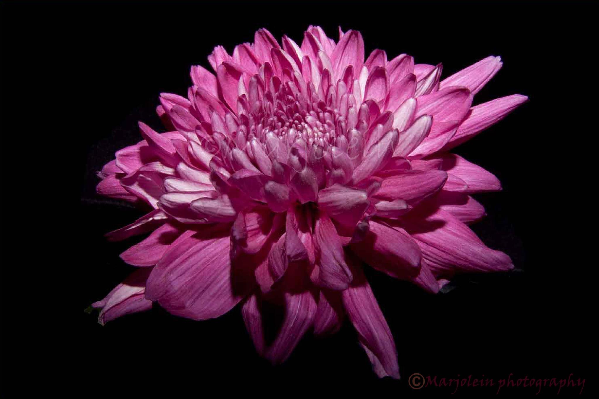 Flower    -  Bloem by Marjolein Deelen