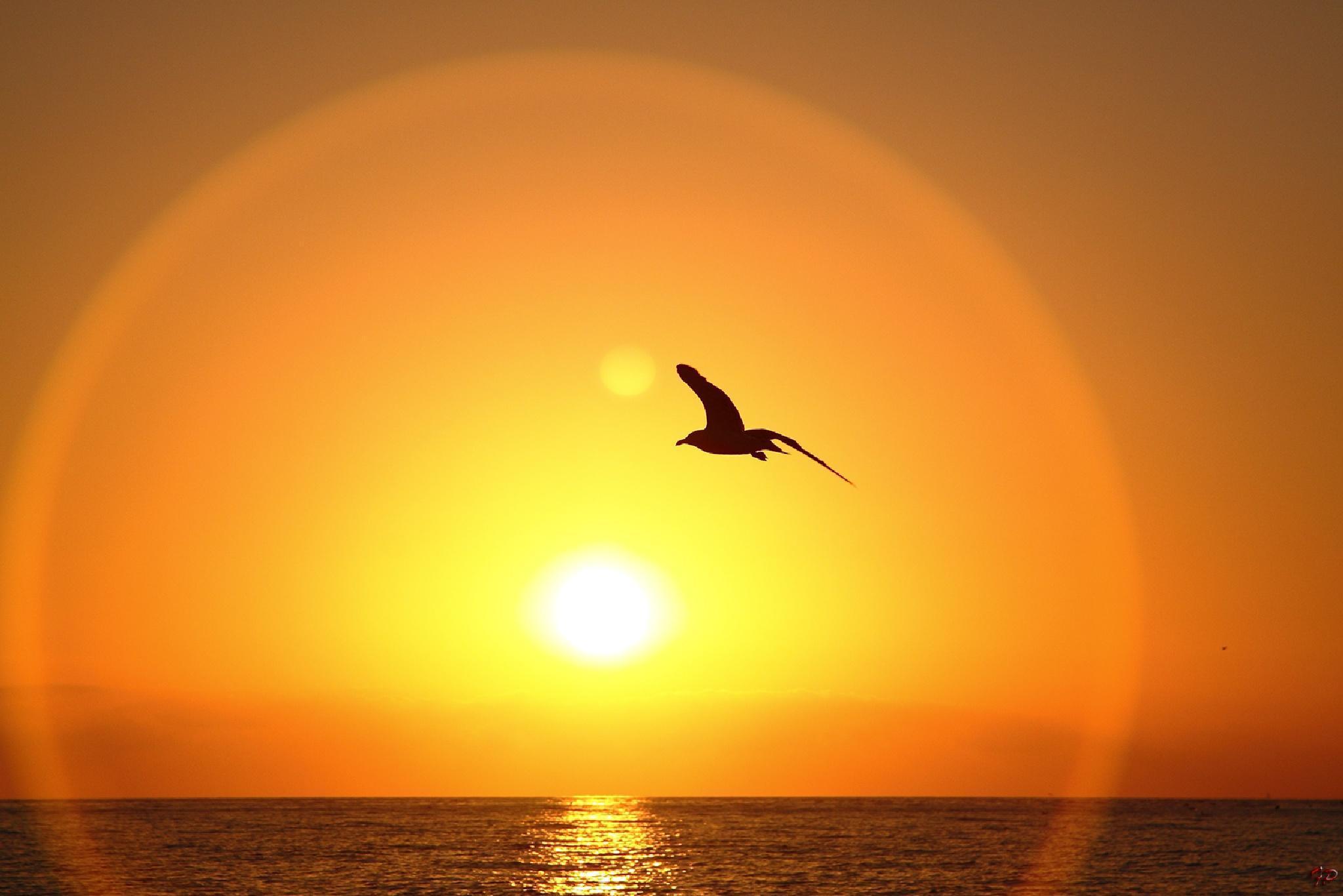Al tramonto by Fabio Pisciotta
