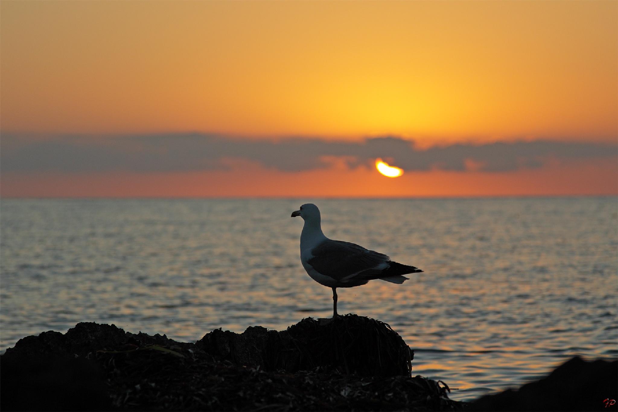 at sunset by Fabio Pisciotta