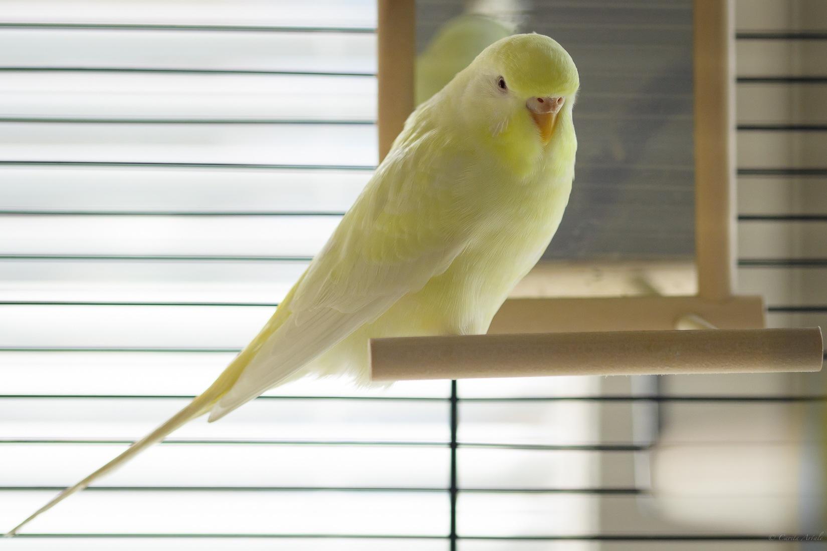 Meet Polly by Carita