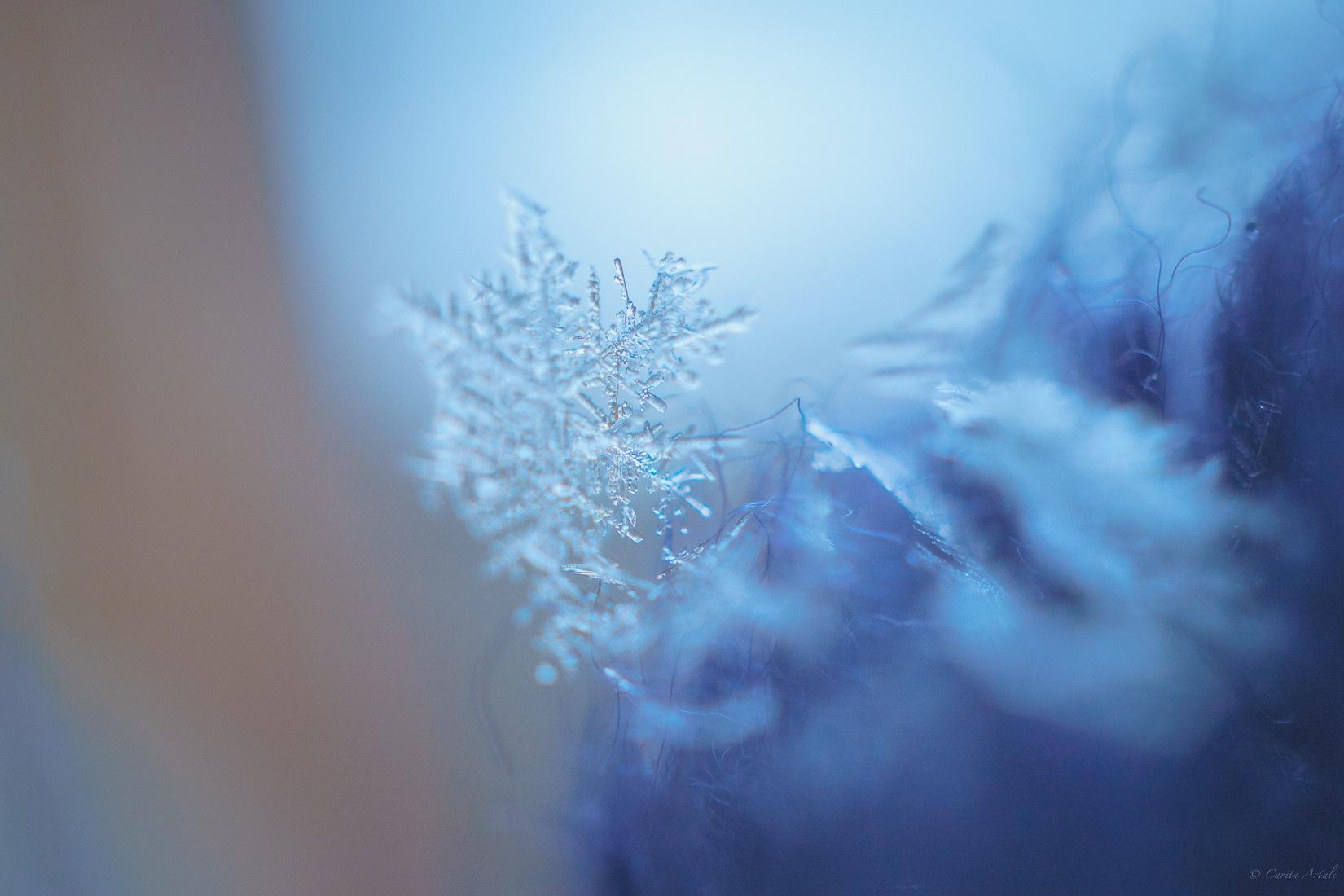 February cold by Carita