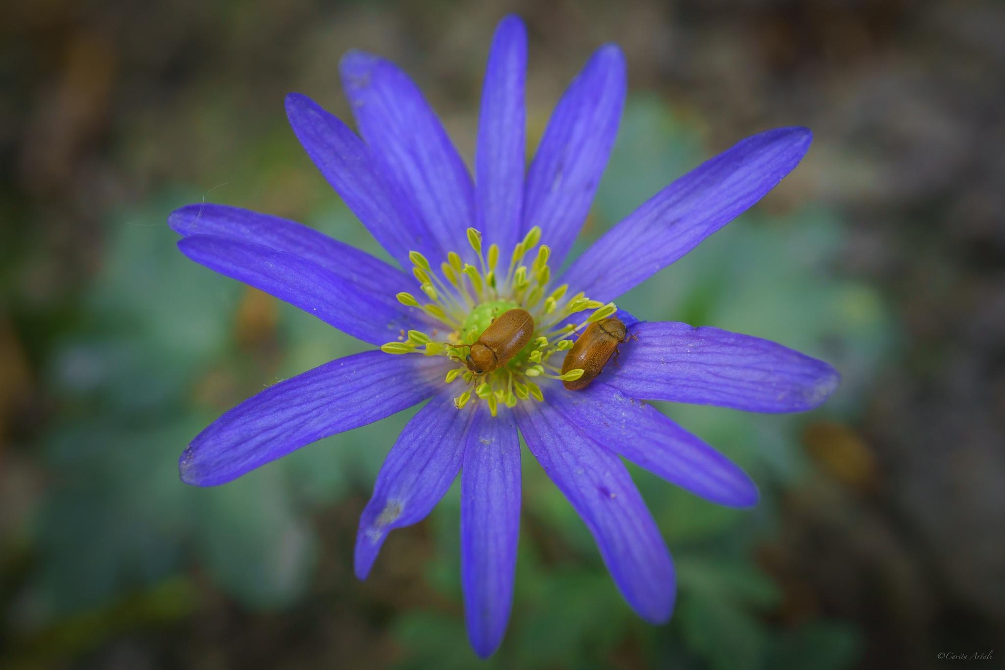 bug love by Carita