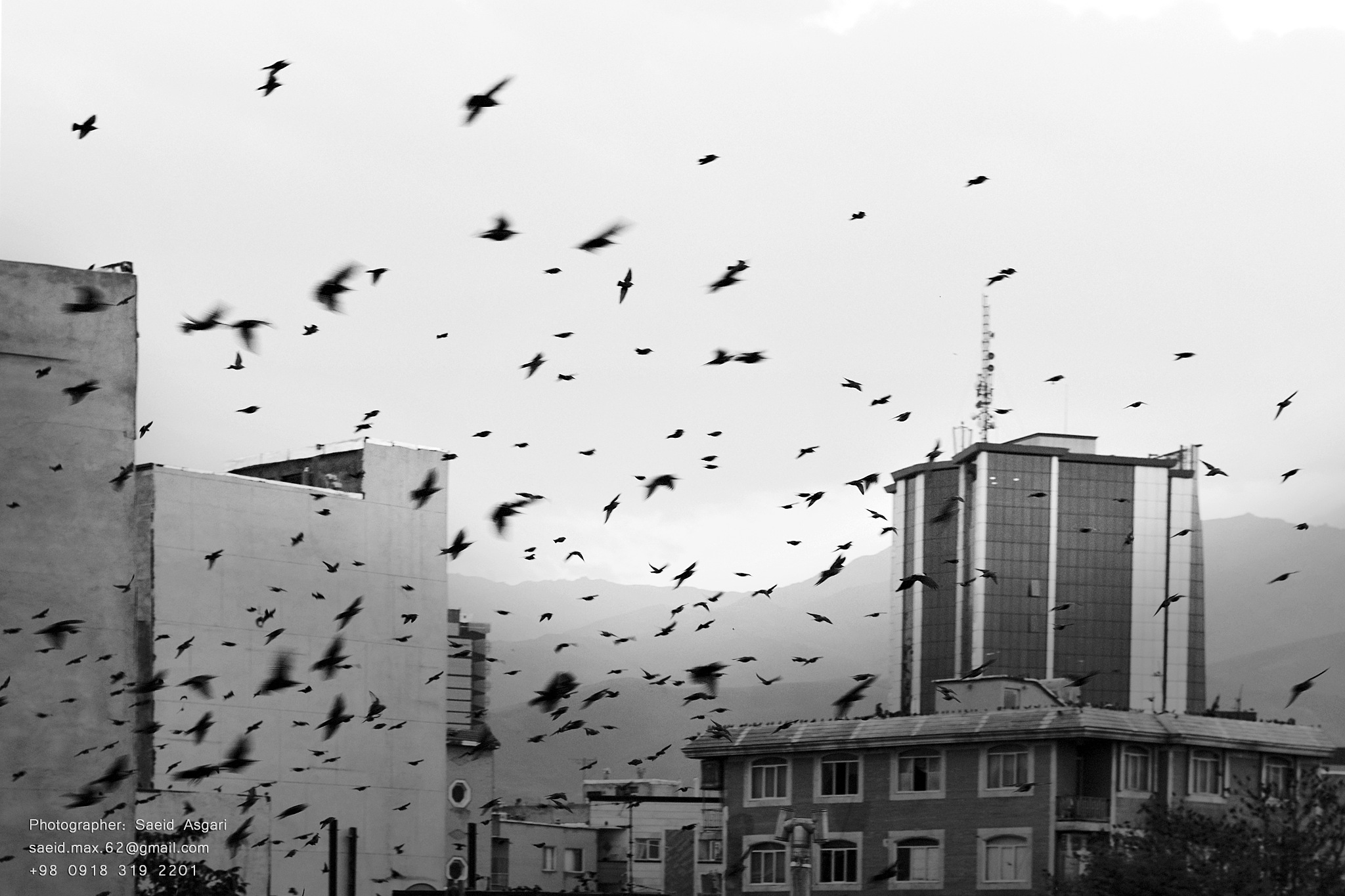 Fly Starlings  ... by Saeid_Asgari