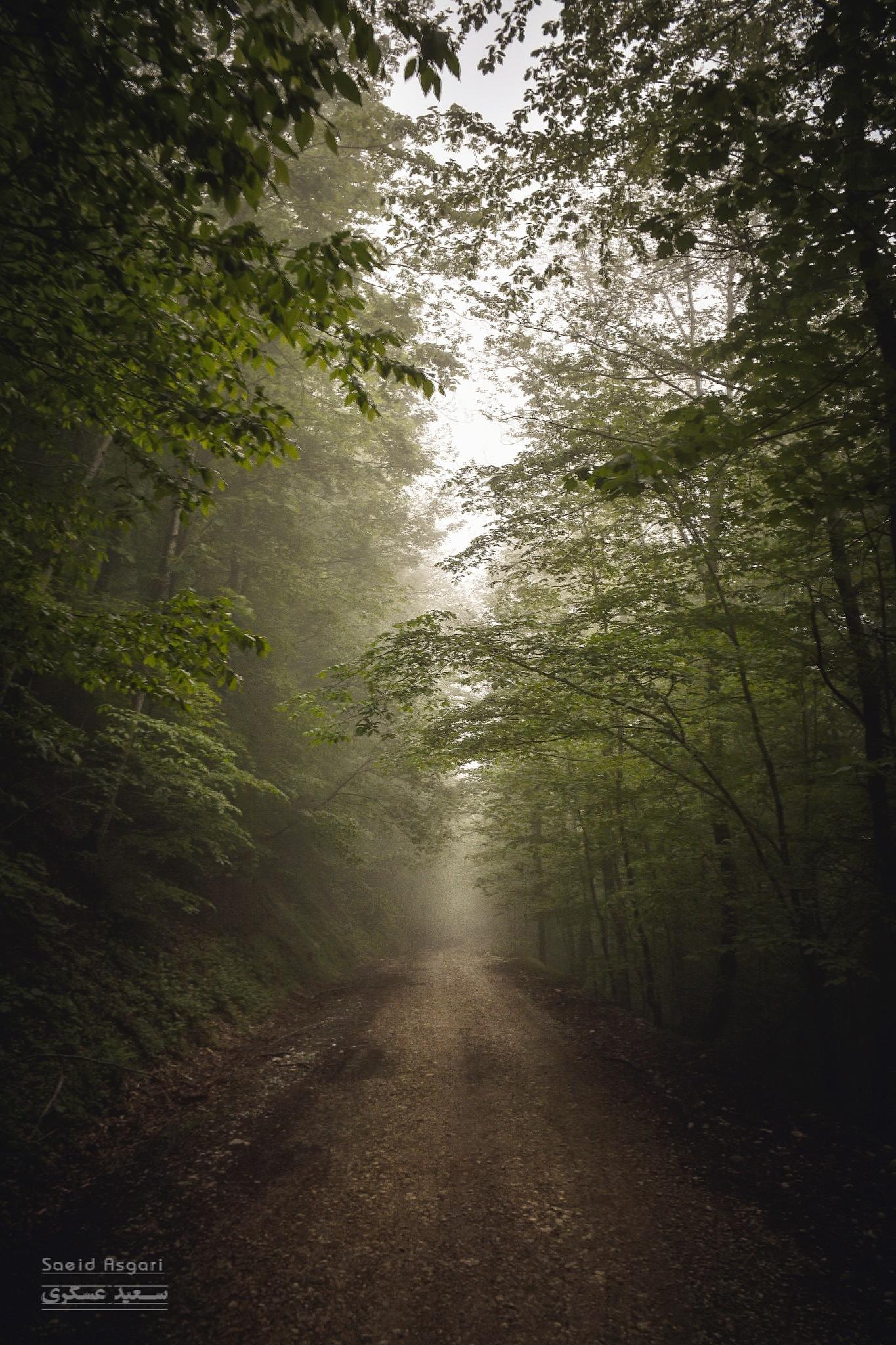 Dream Road... by Saeid_Asgari