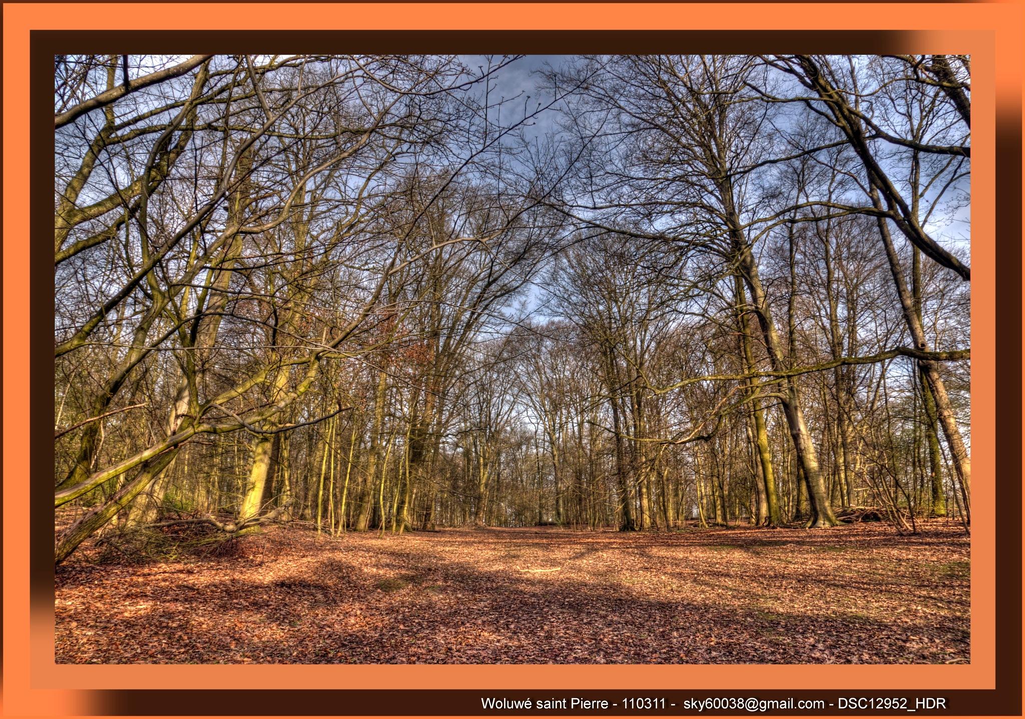 Le Parc de Woluwe  by Boyer Olivier Pascal Louis