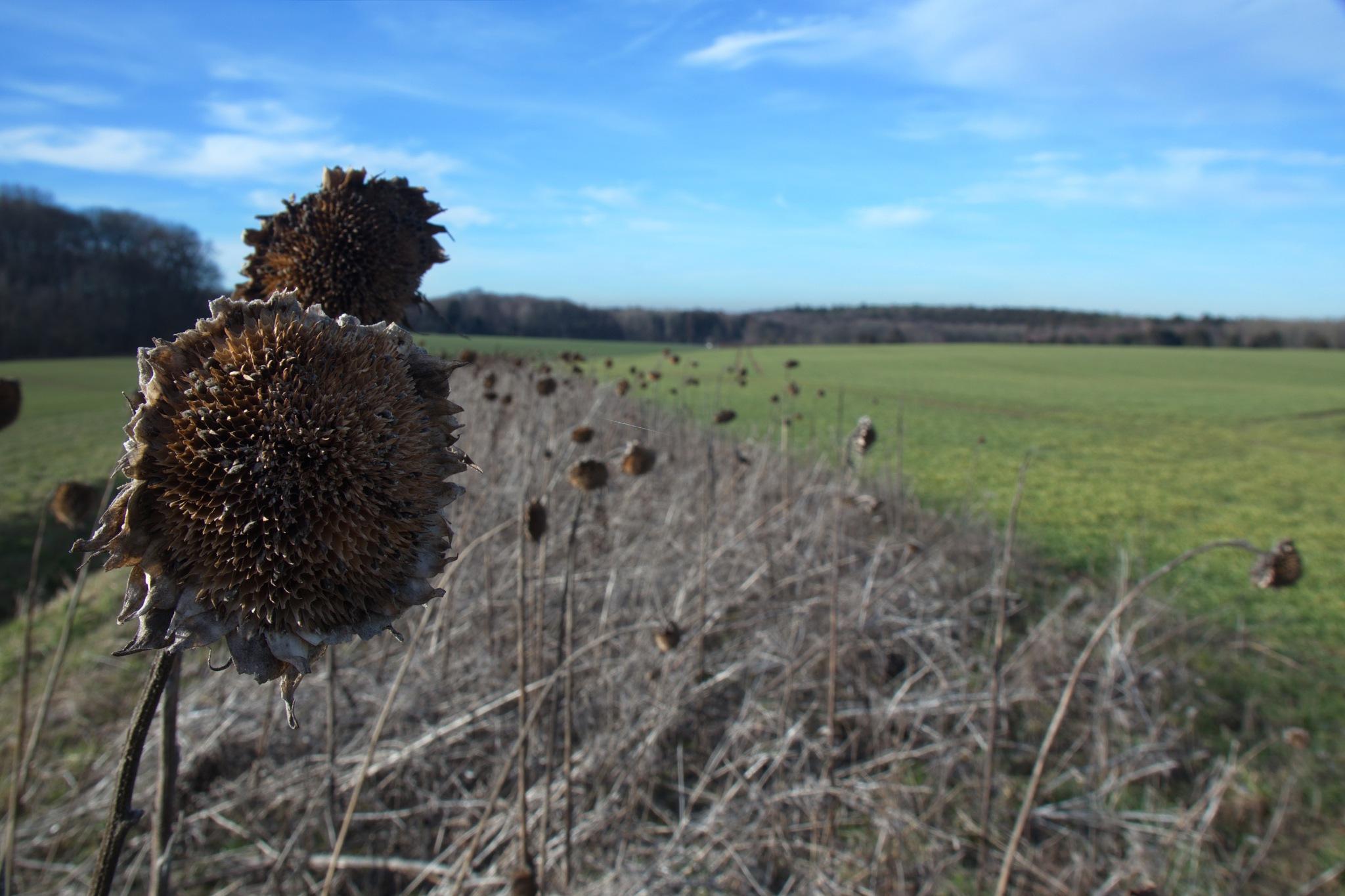 Photo in Rural #schutz #protection #gebiet #area #wild #game #vögel #birds