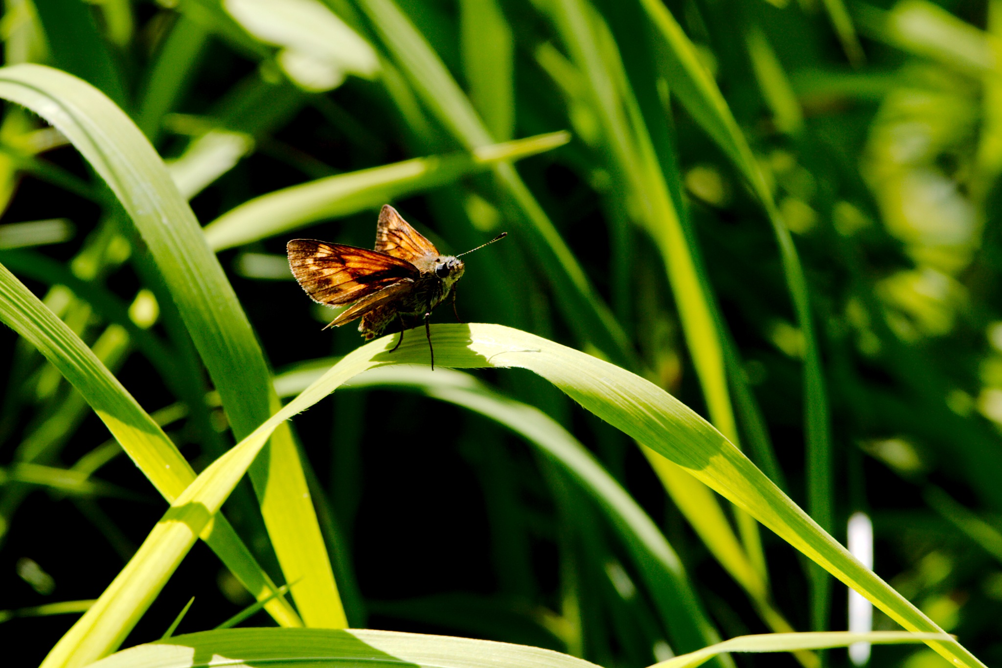 Schmetterling /butterfly by Rolf-Dieter Balindt