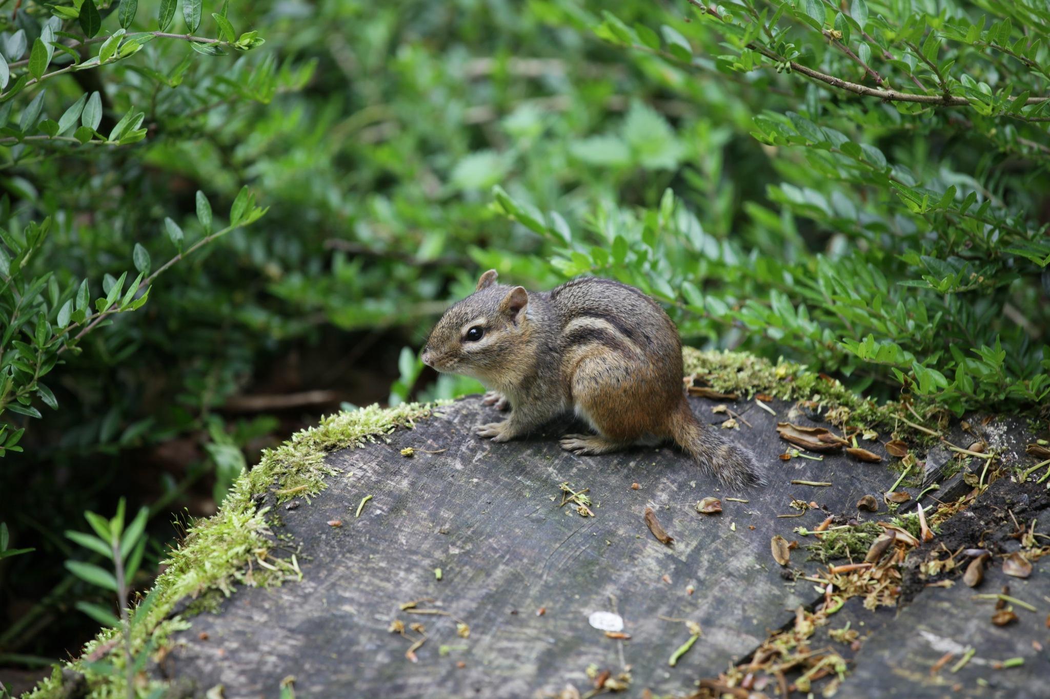 Hörnchen / Squirrels by Rolf-Dieter Balindt