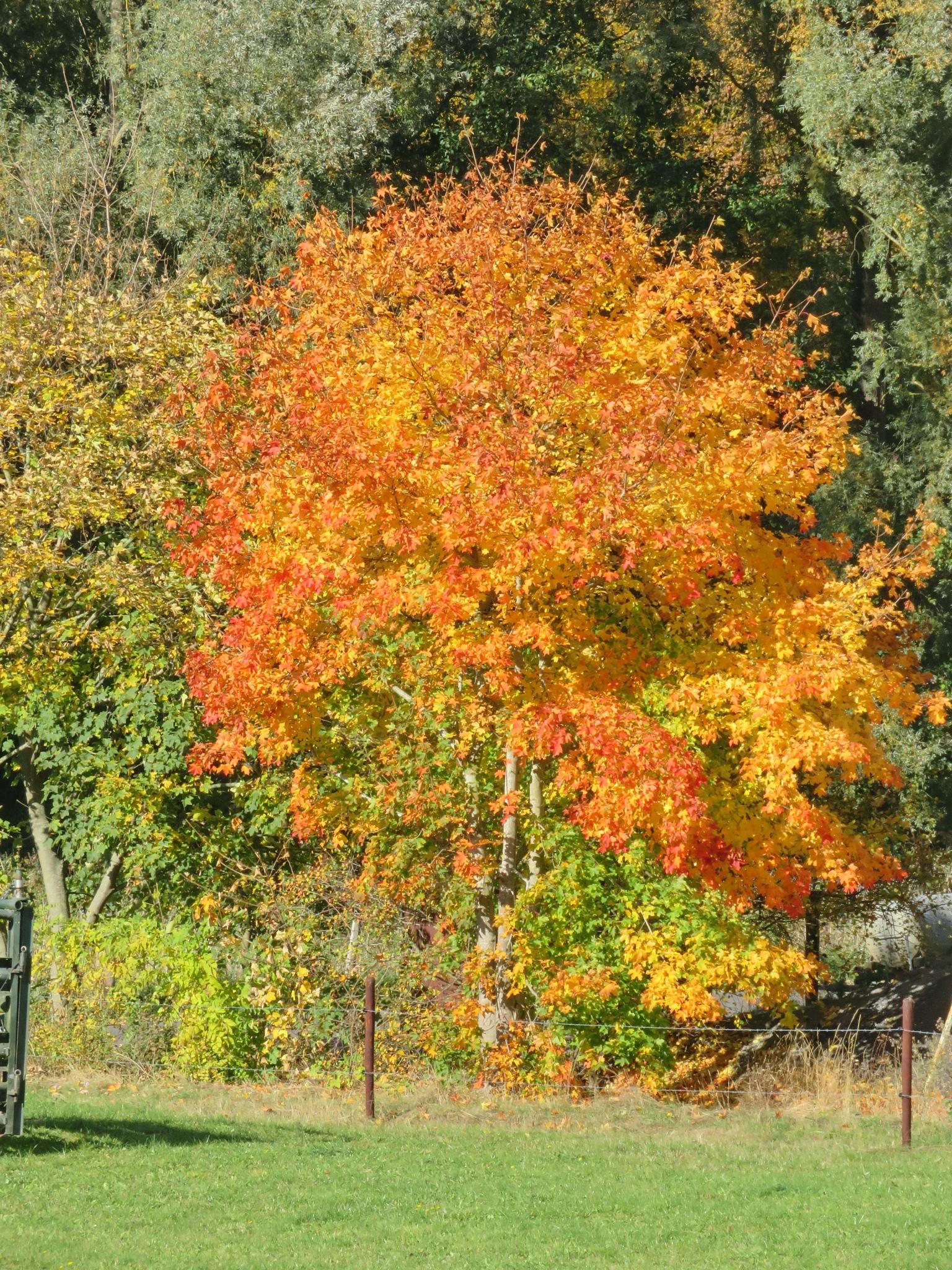 Baum by Rolf-Dieter Balindt