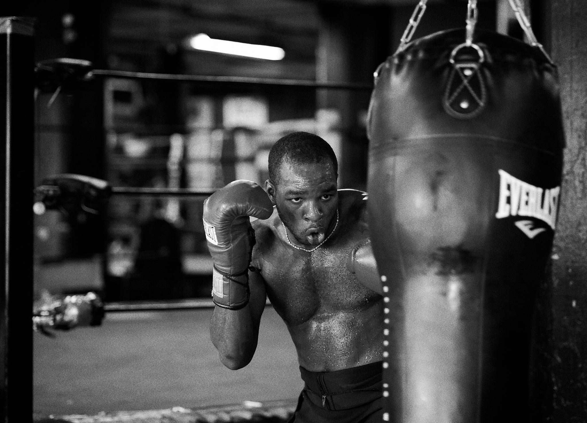 Boxer by Eric Kazmirek