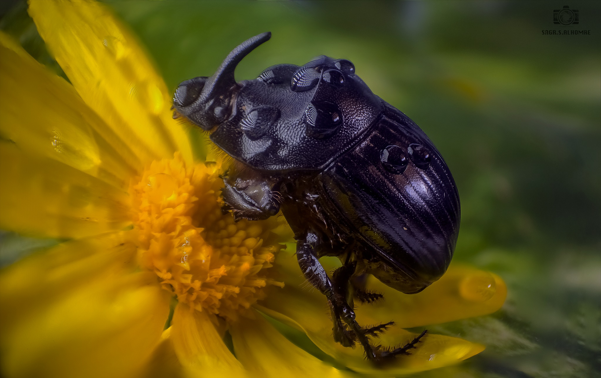 macro_2 by SSAlhomre