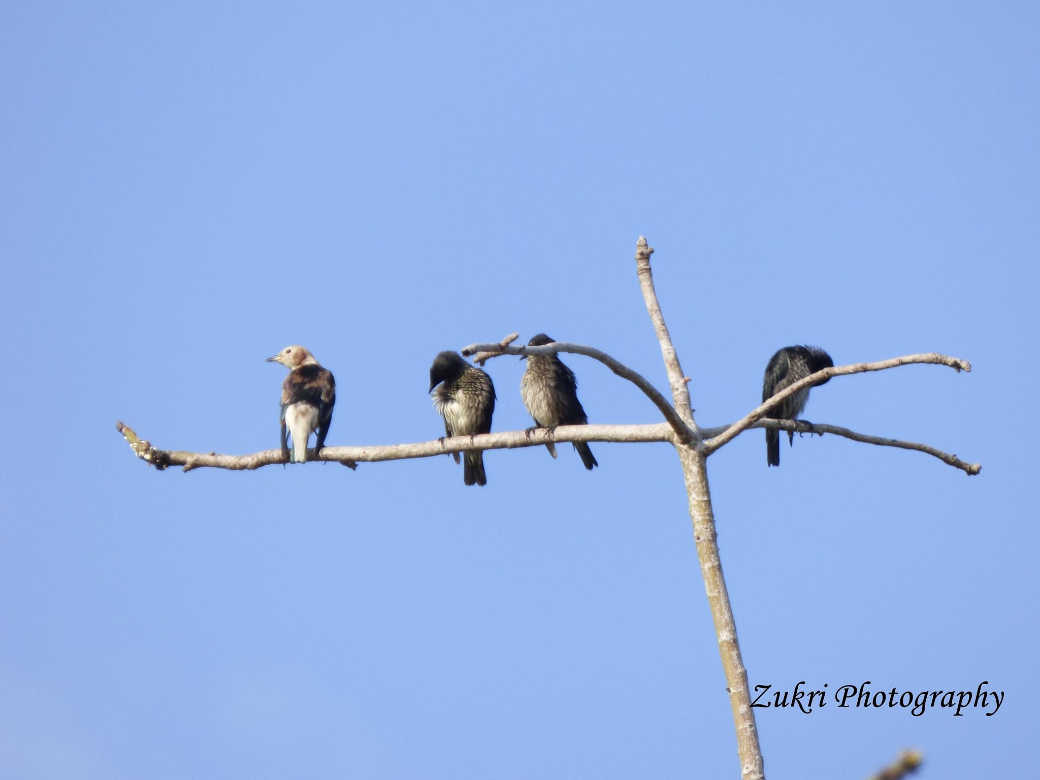 Birds by Zukri Ld