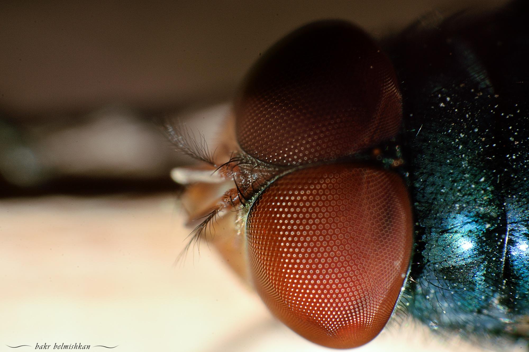 fly by Bakr Belmishkan
