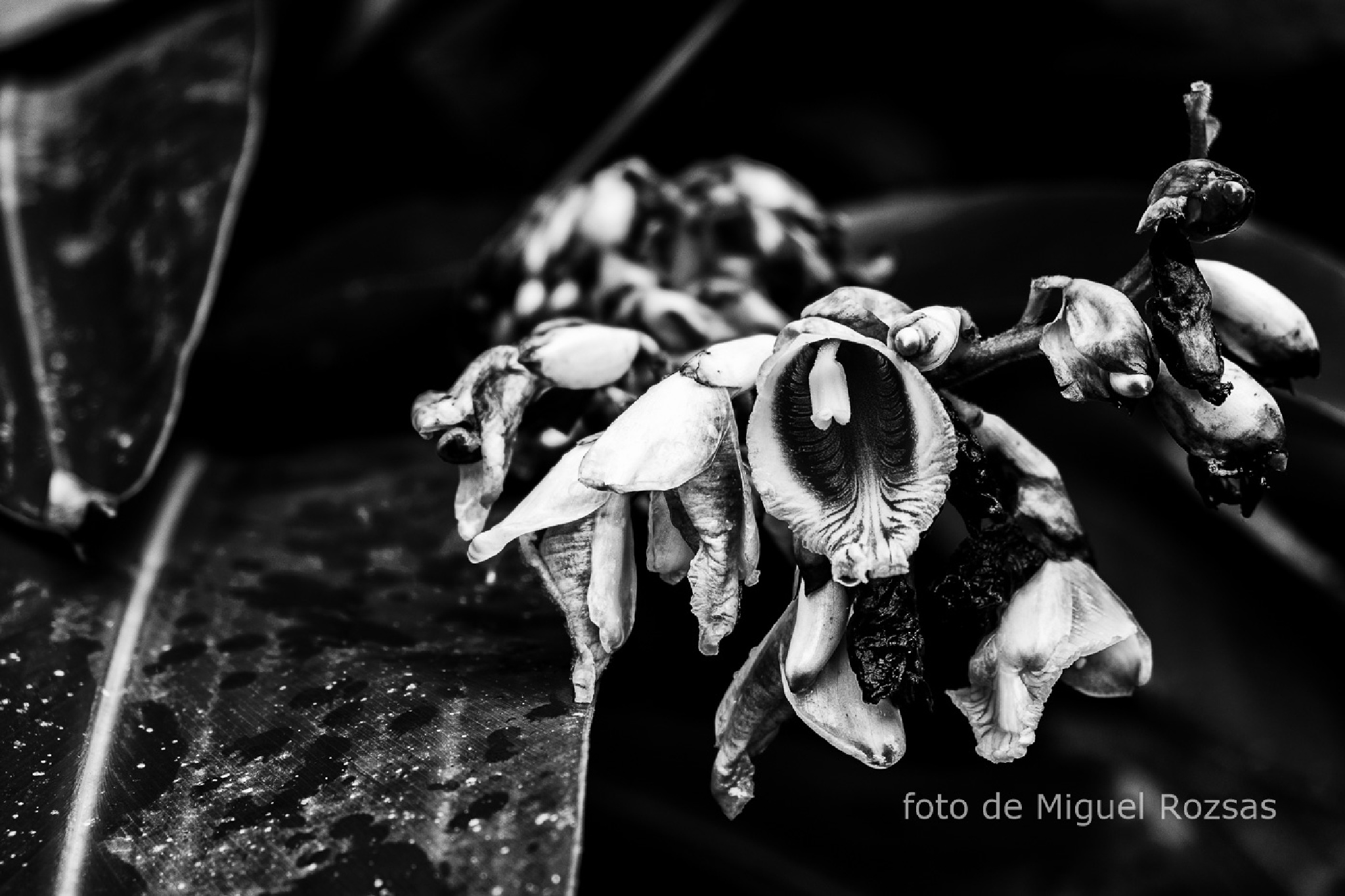 Photo in Travel #wild flower #b&w #atlantic forest
