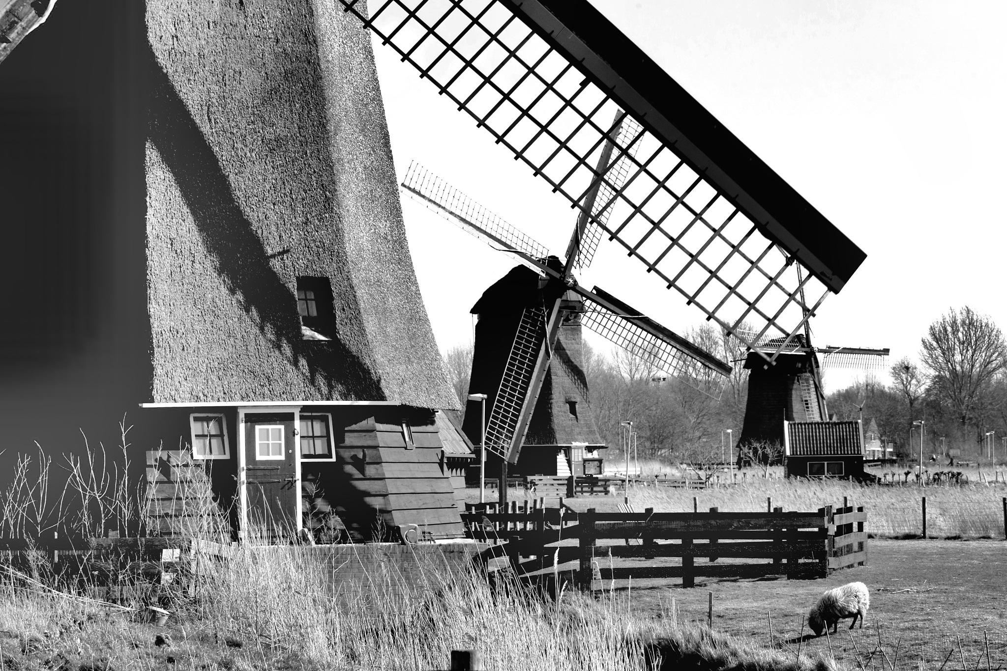 Windmills at Alkmaar-Holland in b&w by Bob66