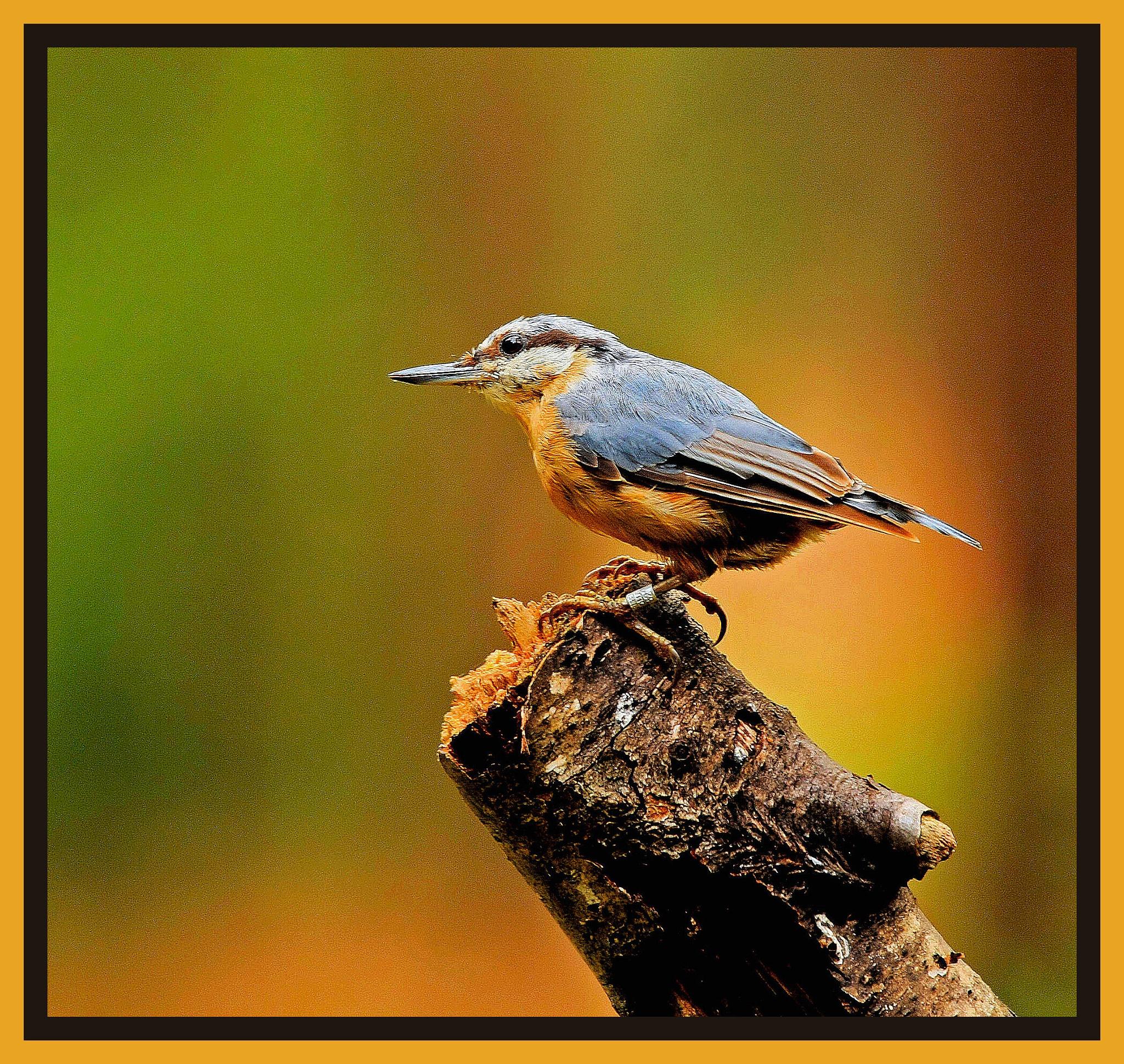 Photo in Animal #bird #boomklever