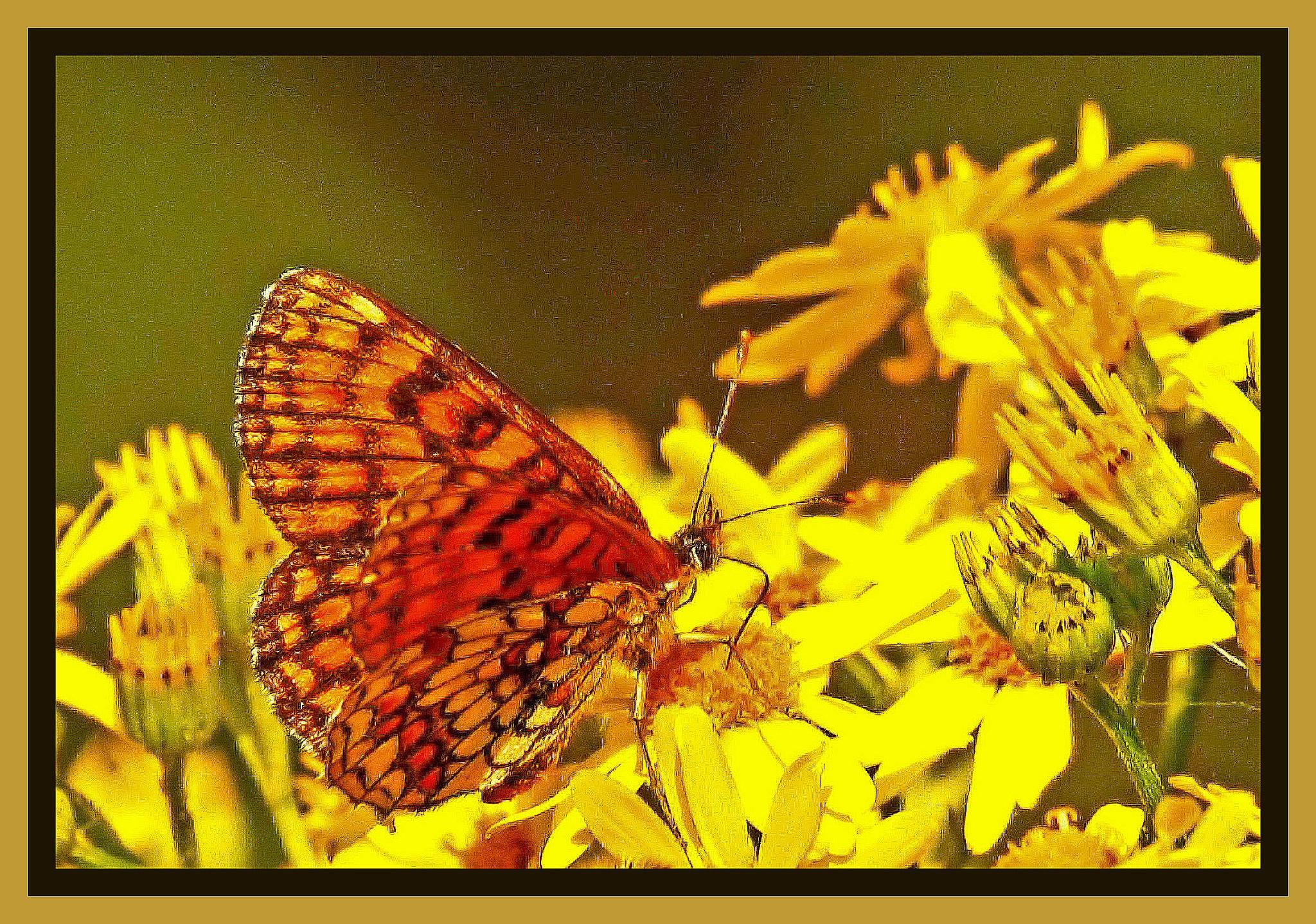 Butterfly by Bob66