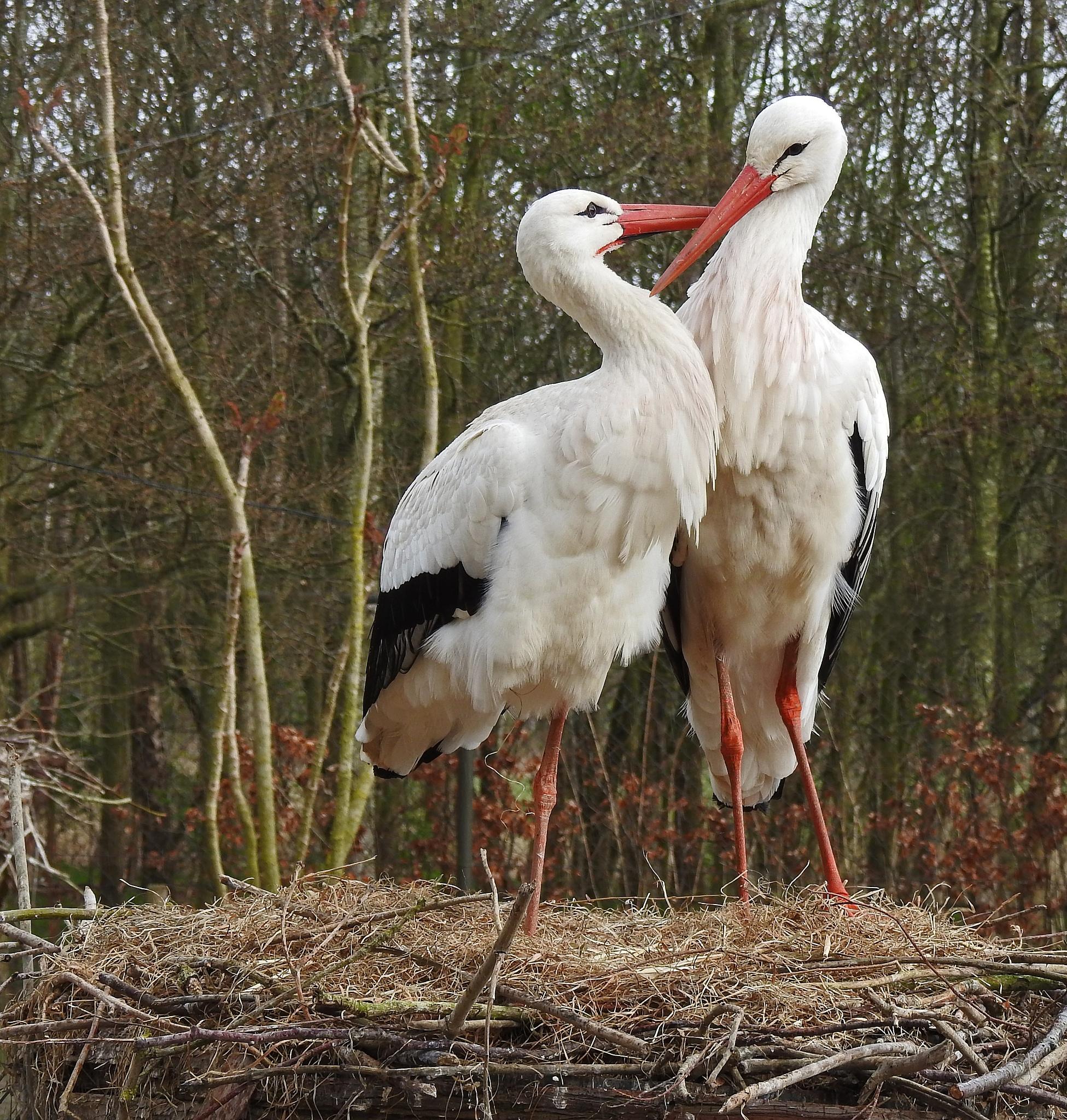 Photo in Animal #storks