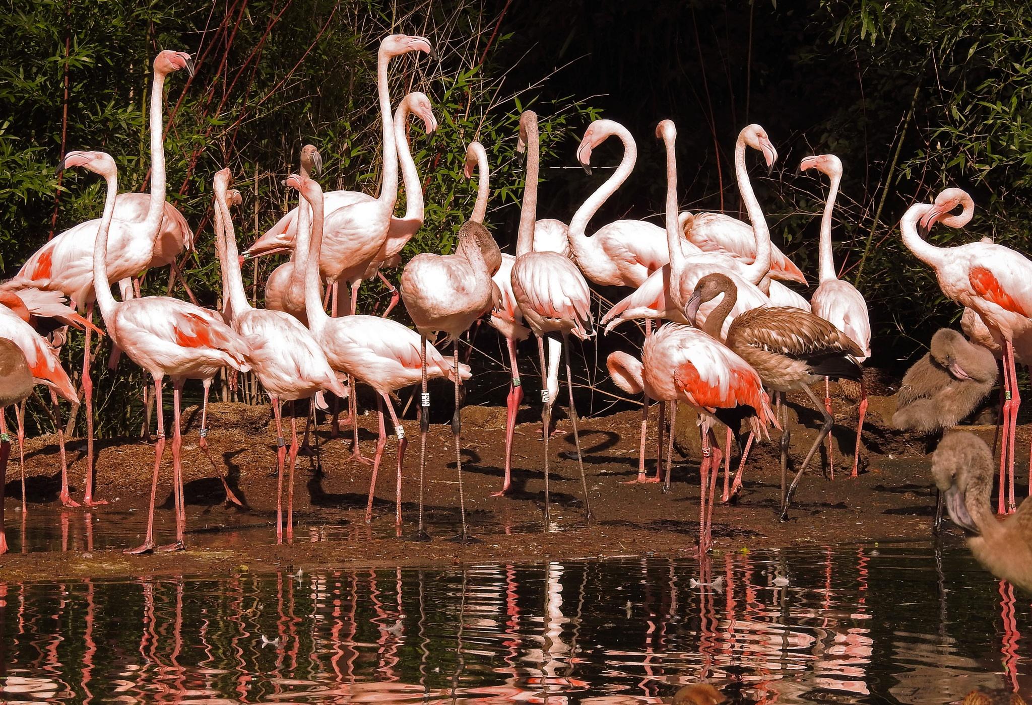 Flamingo's by Bob66