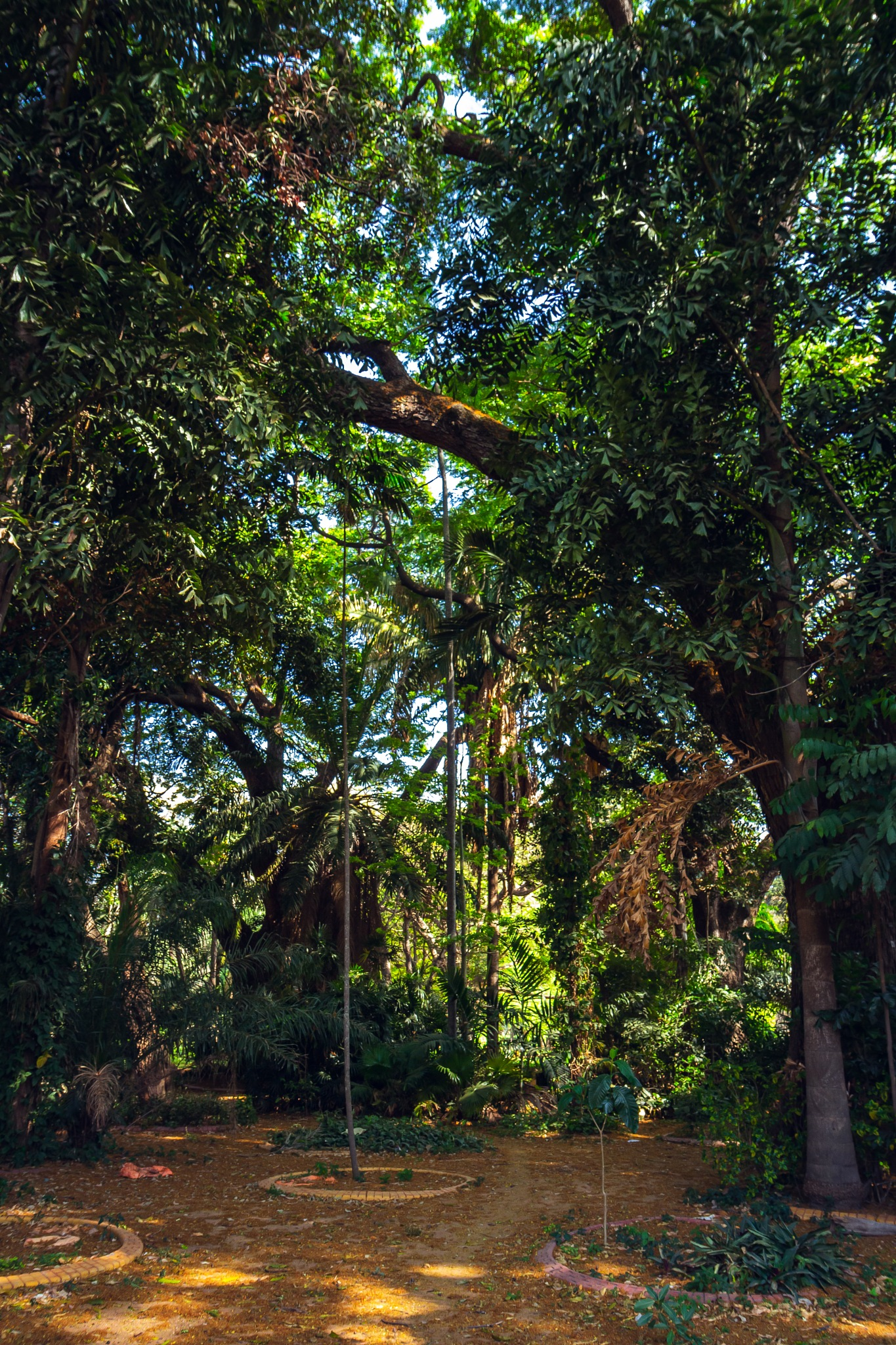 Strolling through Lalbagh Botanical Garden by Icethistle Photography