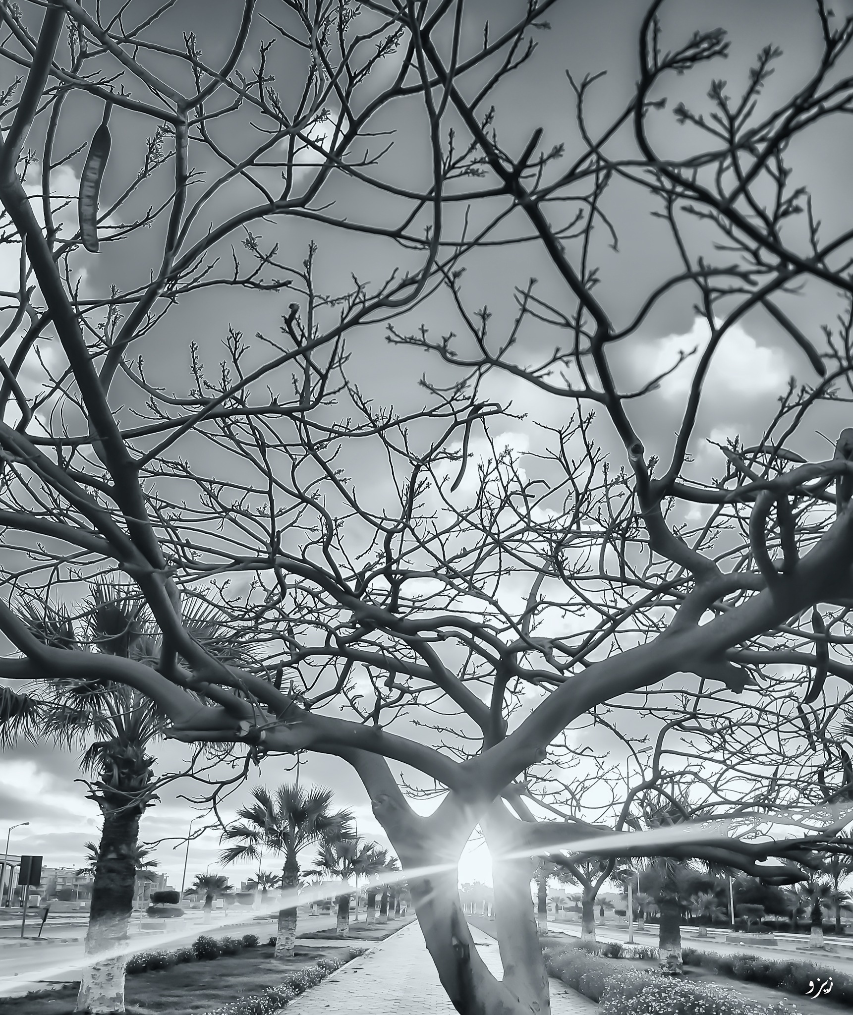 Untitled by Abdulaziz Seddik