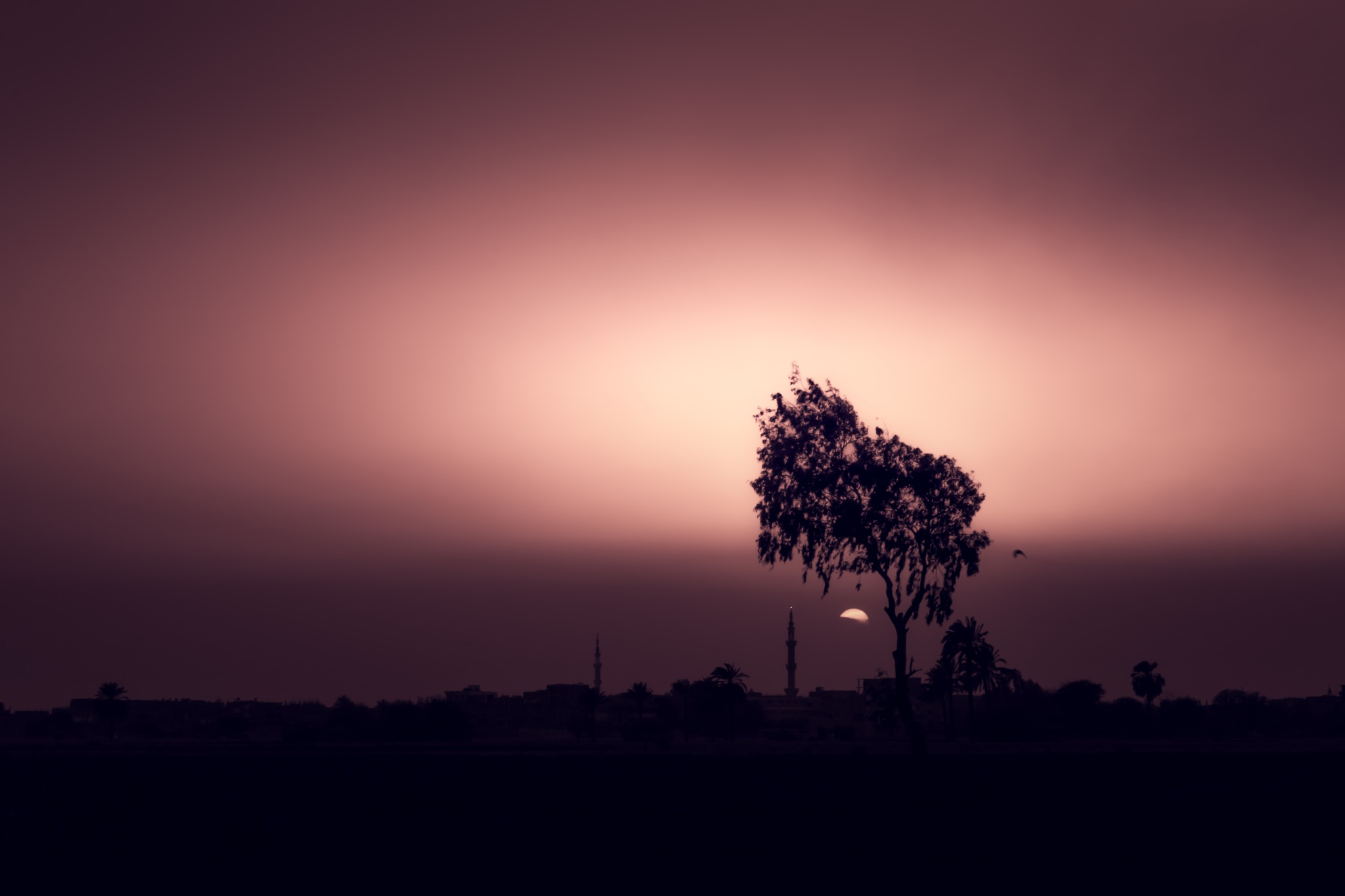 Last light  by Abdulaziz Seddik